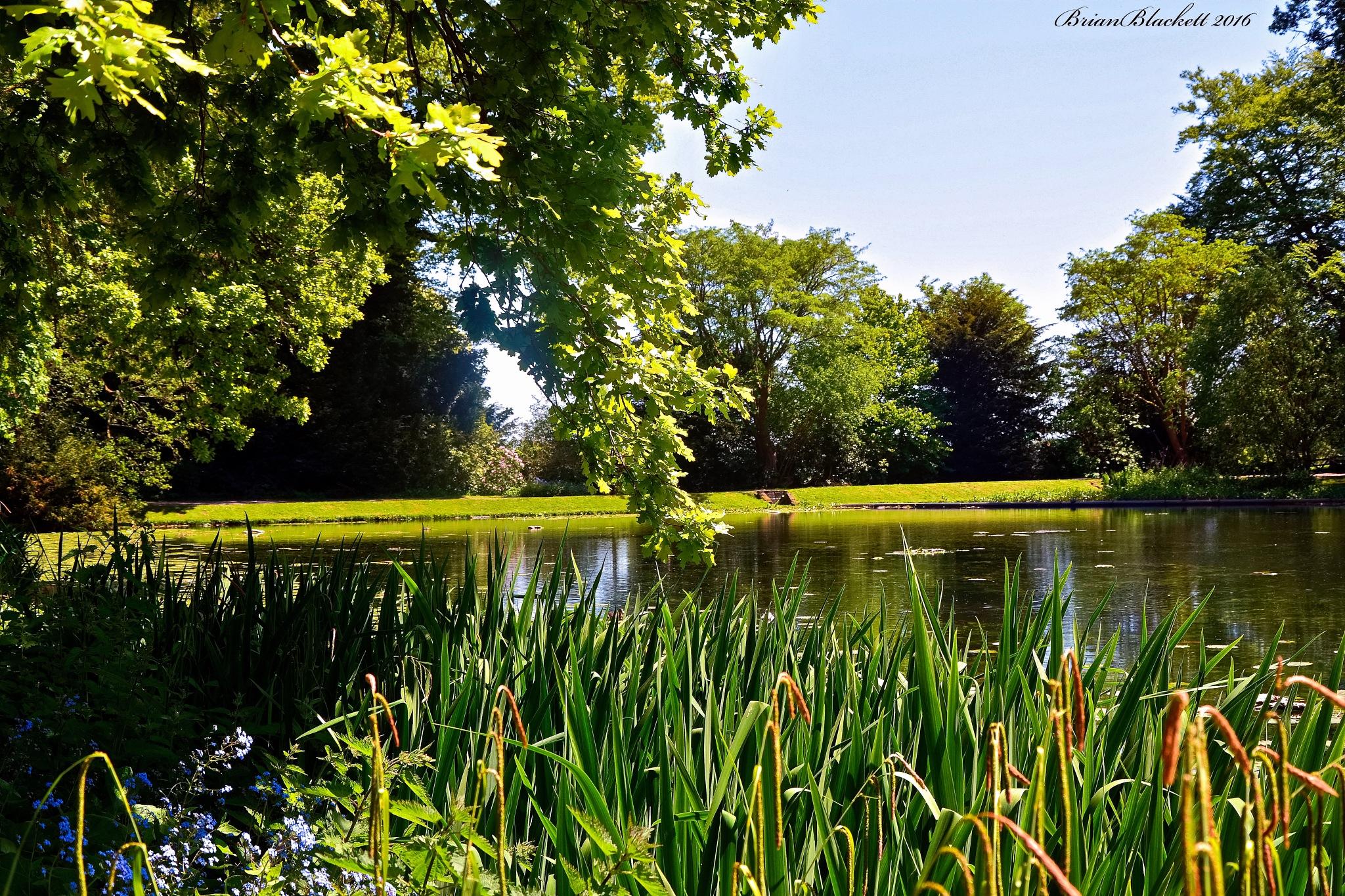 The Lake at Wallington Hall Northumberland UK by brianblackett