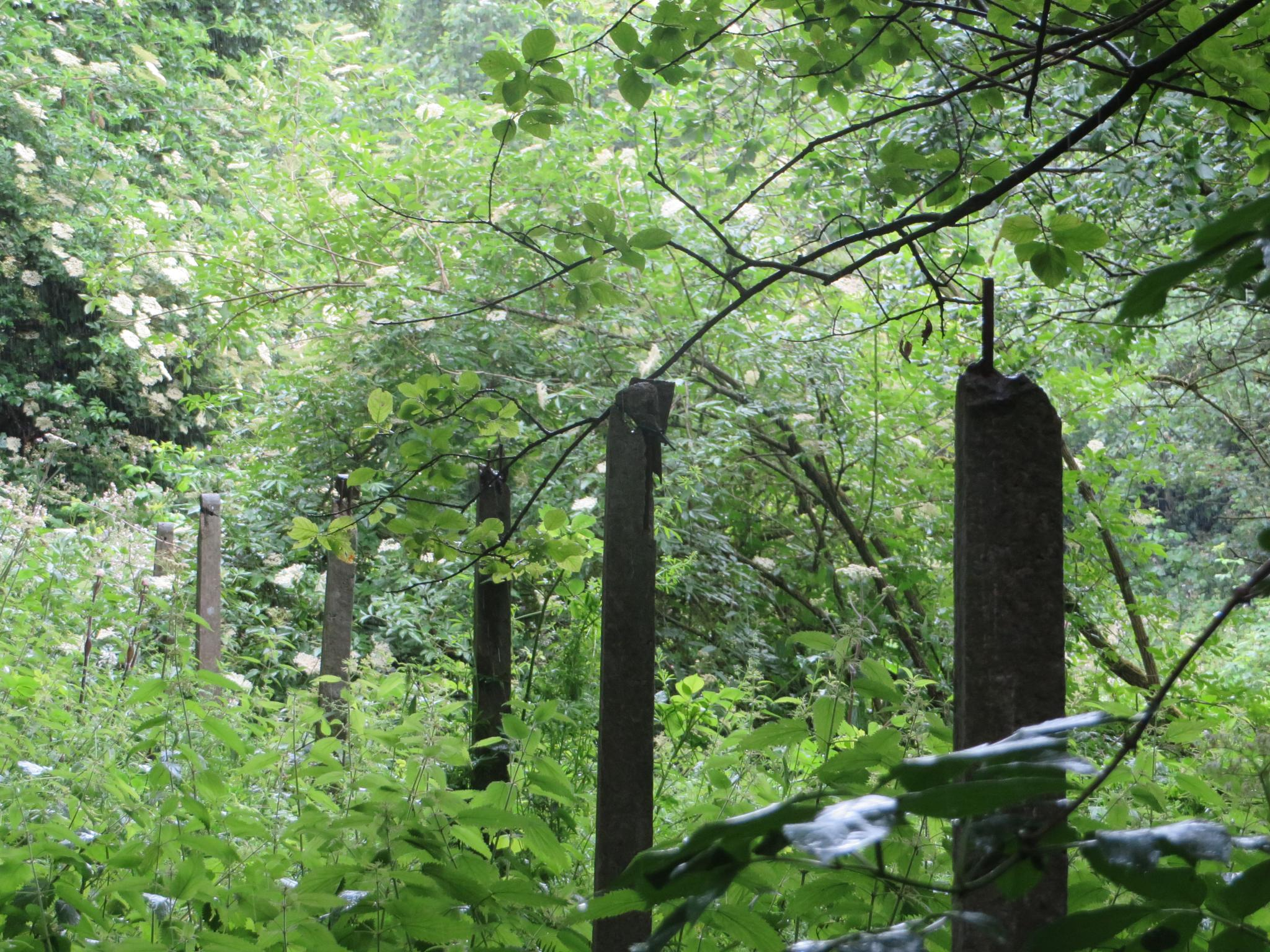 fence posts by Two Dogs Fightin'