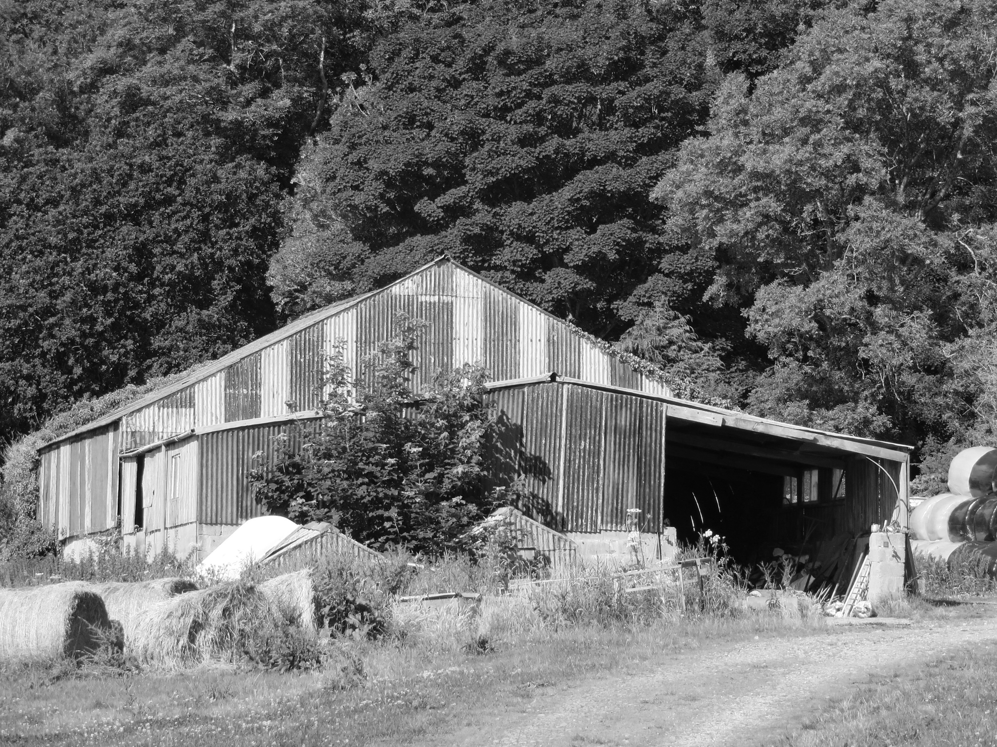 Barn mono by Two Dogs Fightin'