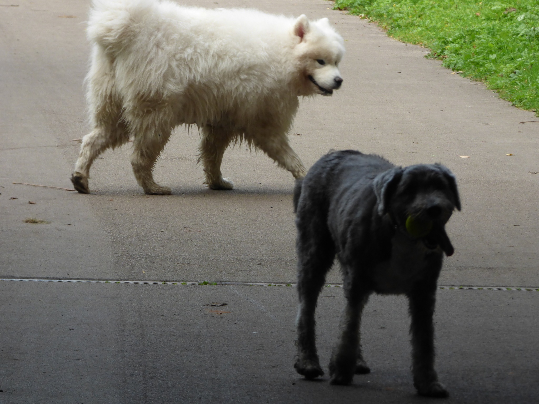 Molly and Knut by Two Dogs Fightin'