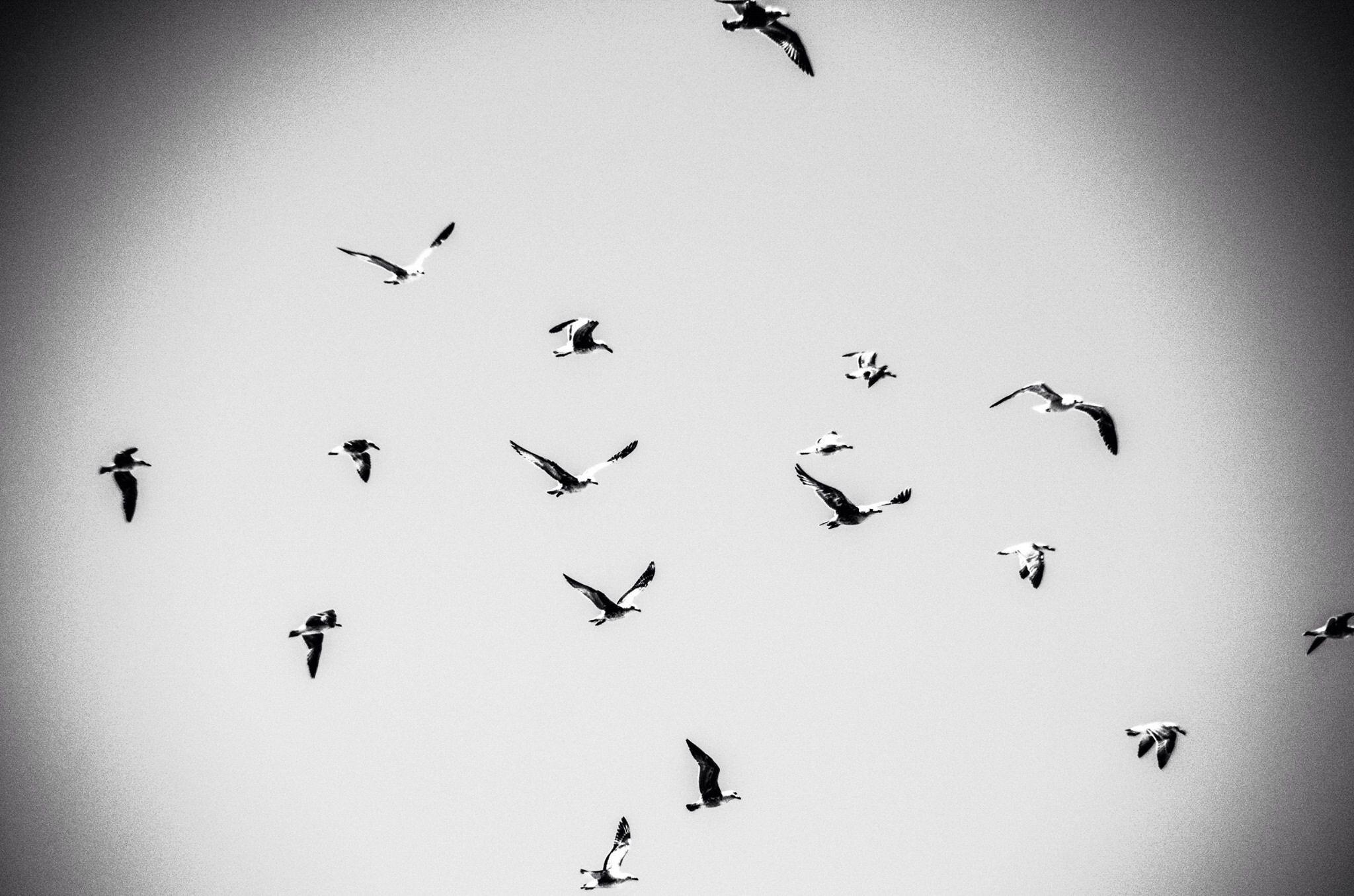 Volar by juanalopez