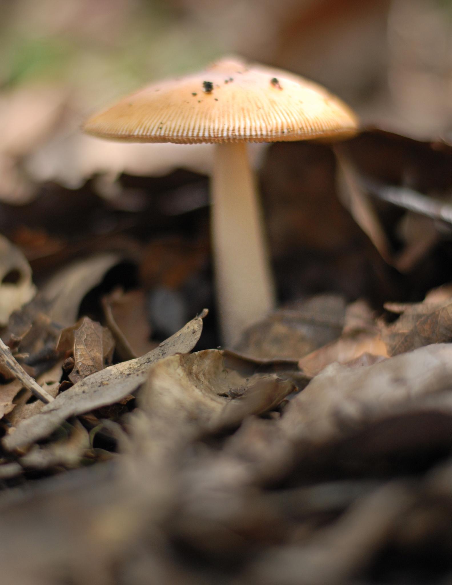 Fungi by Juanjo Rodas