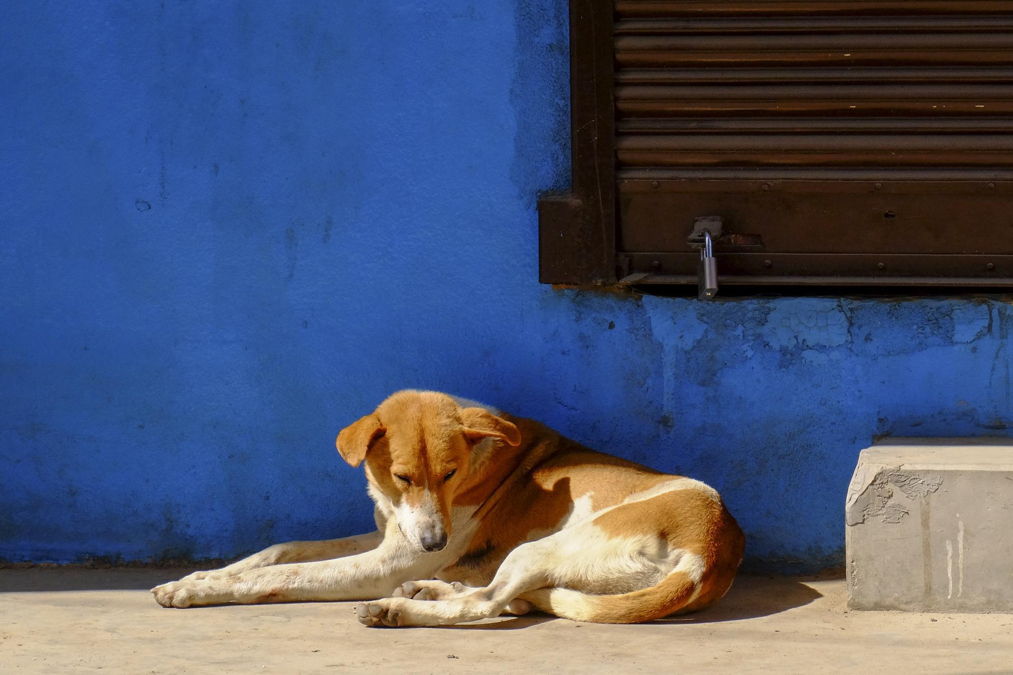 Resting dog by daverton
