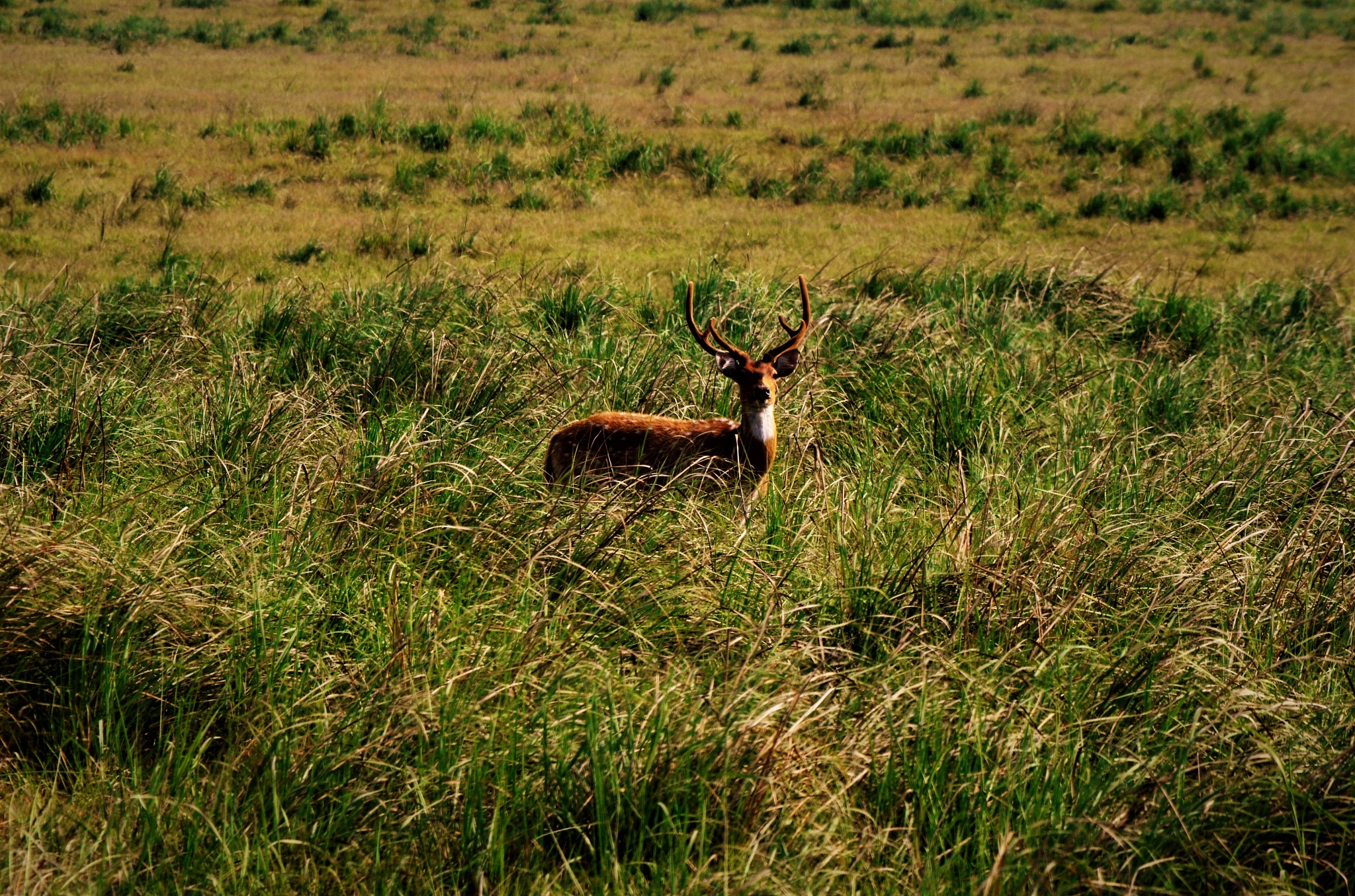 YOUNG STAG LOOKING FOR LOVE by LALIT SAHDEV