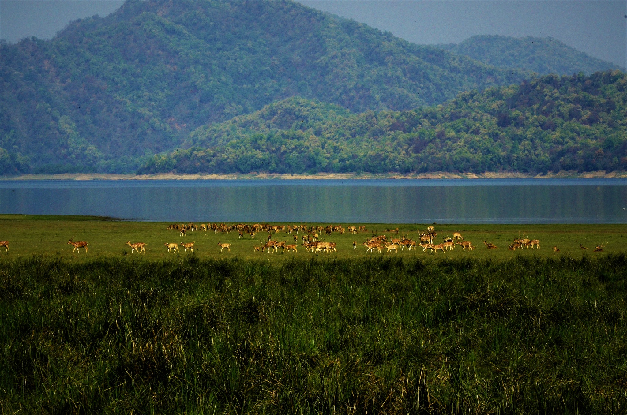 BEAUTIFUL  CORBETT SETTING  by LALIT SAHDEV