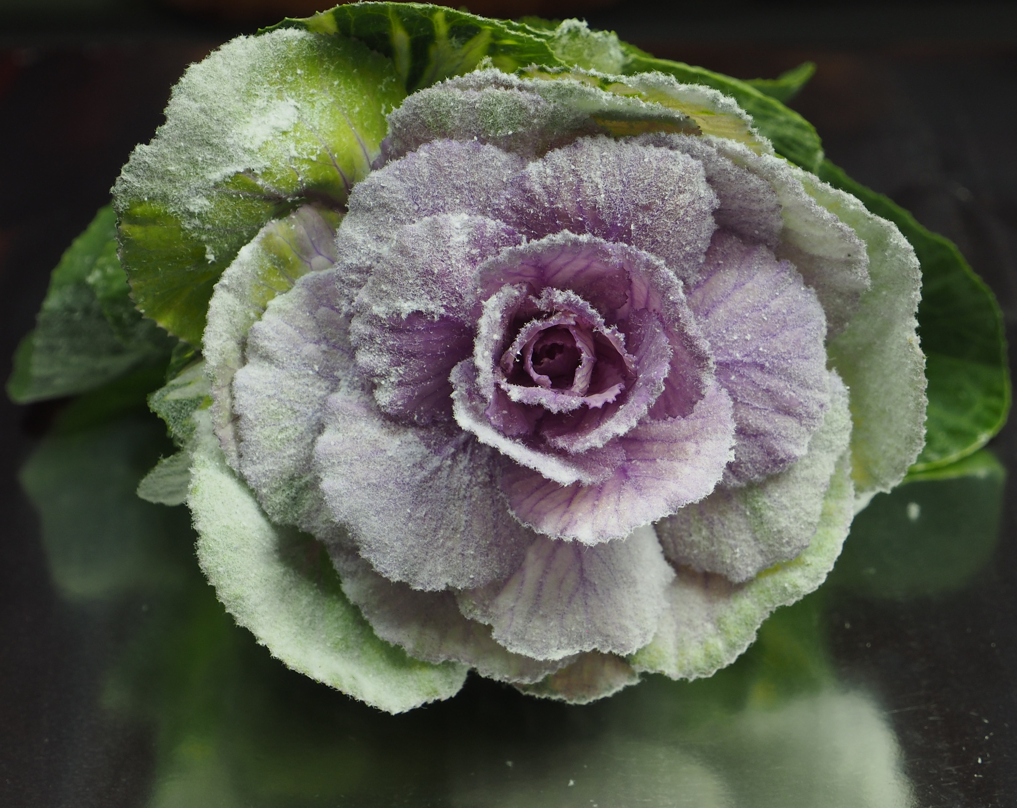 Ornemental Cabbage Adorned by Gillian James