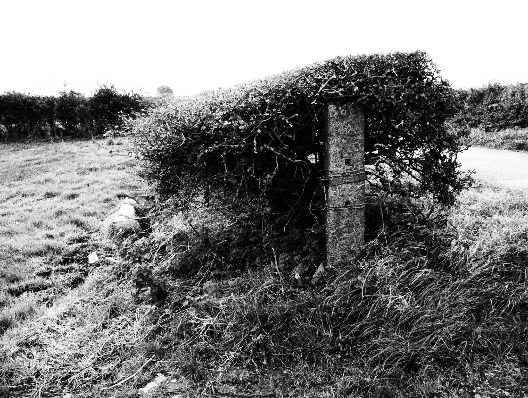 Hedge and Post by Gillian James