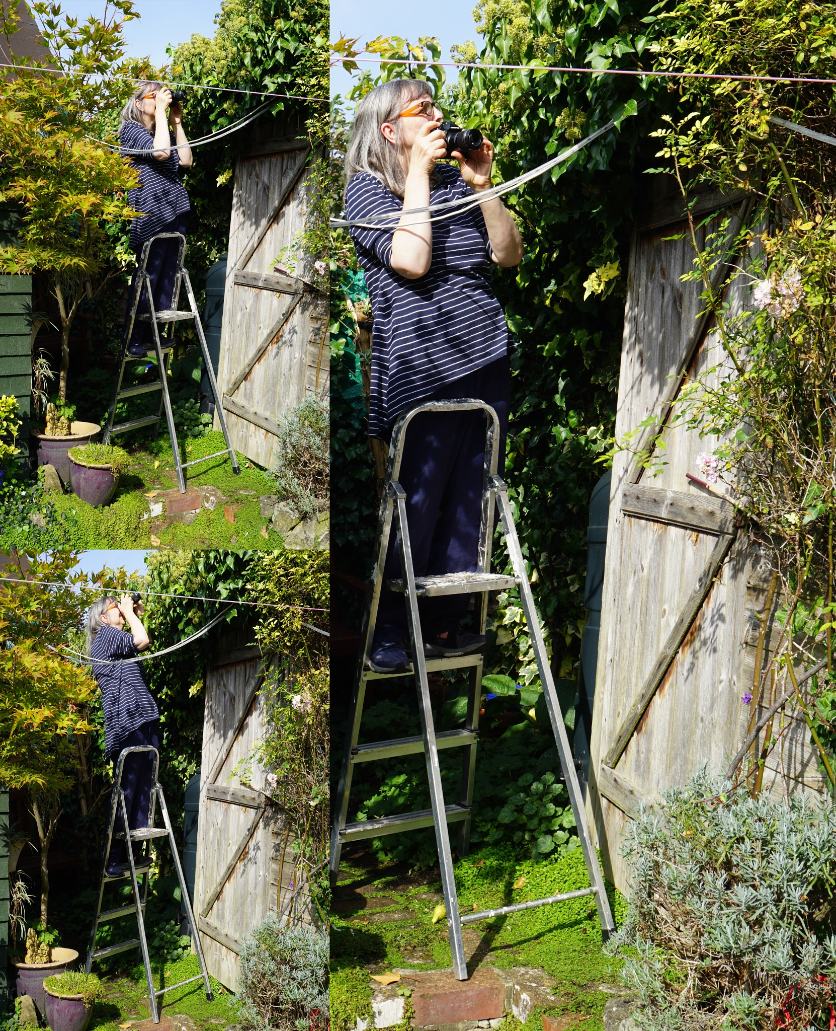 Step-Ladder Photography by Gillian James