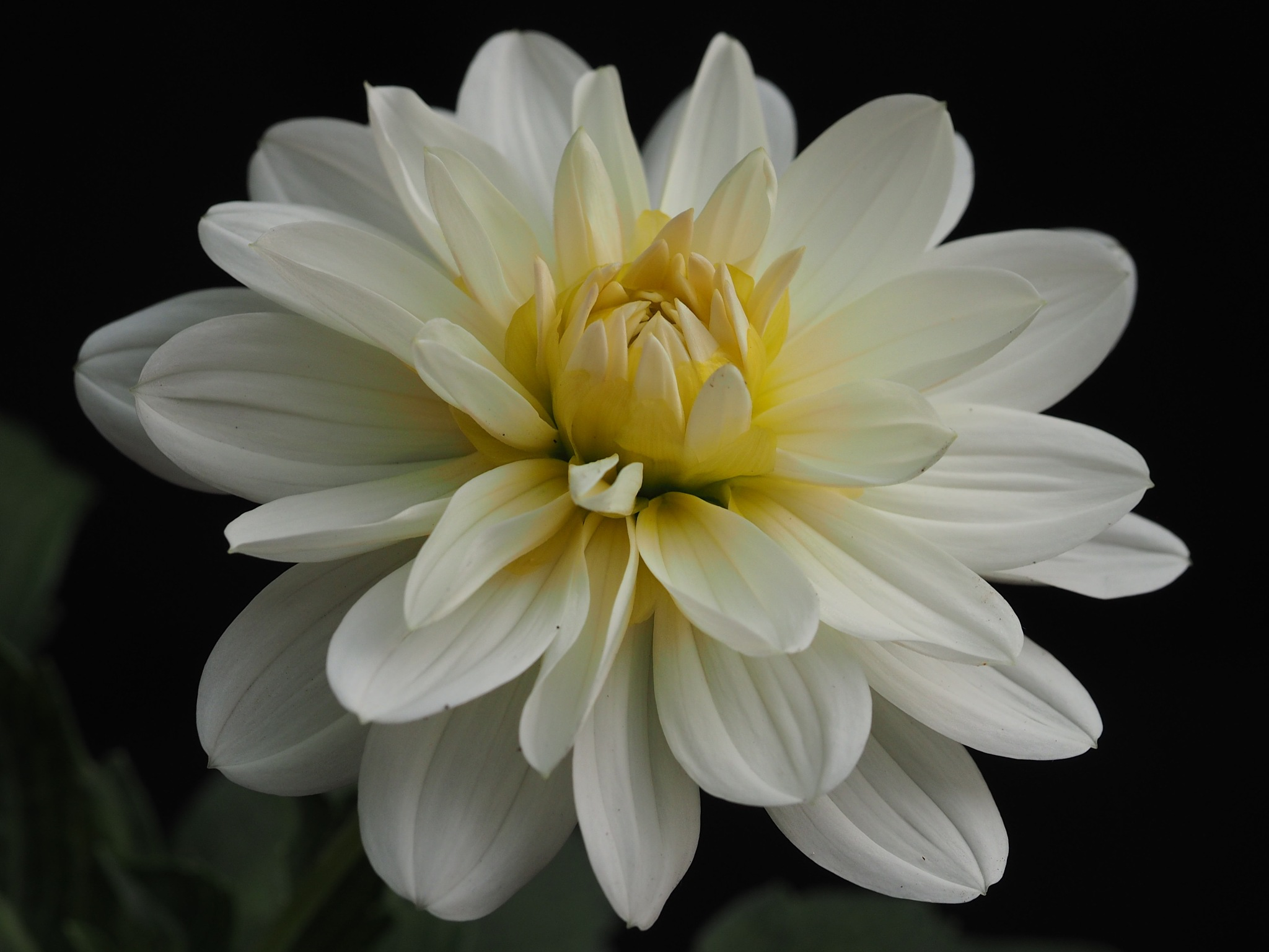 White Suplication by Gillian James