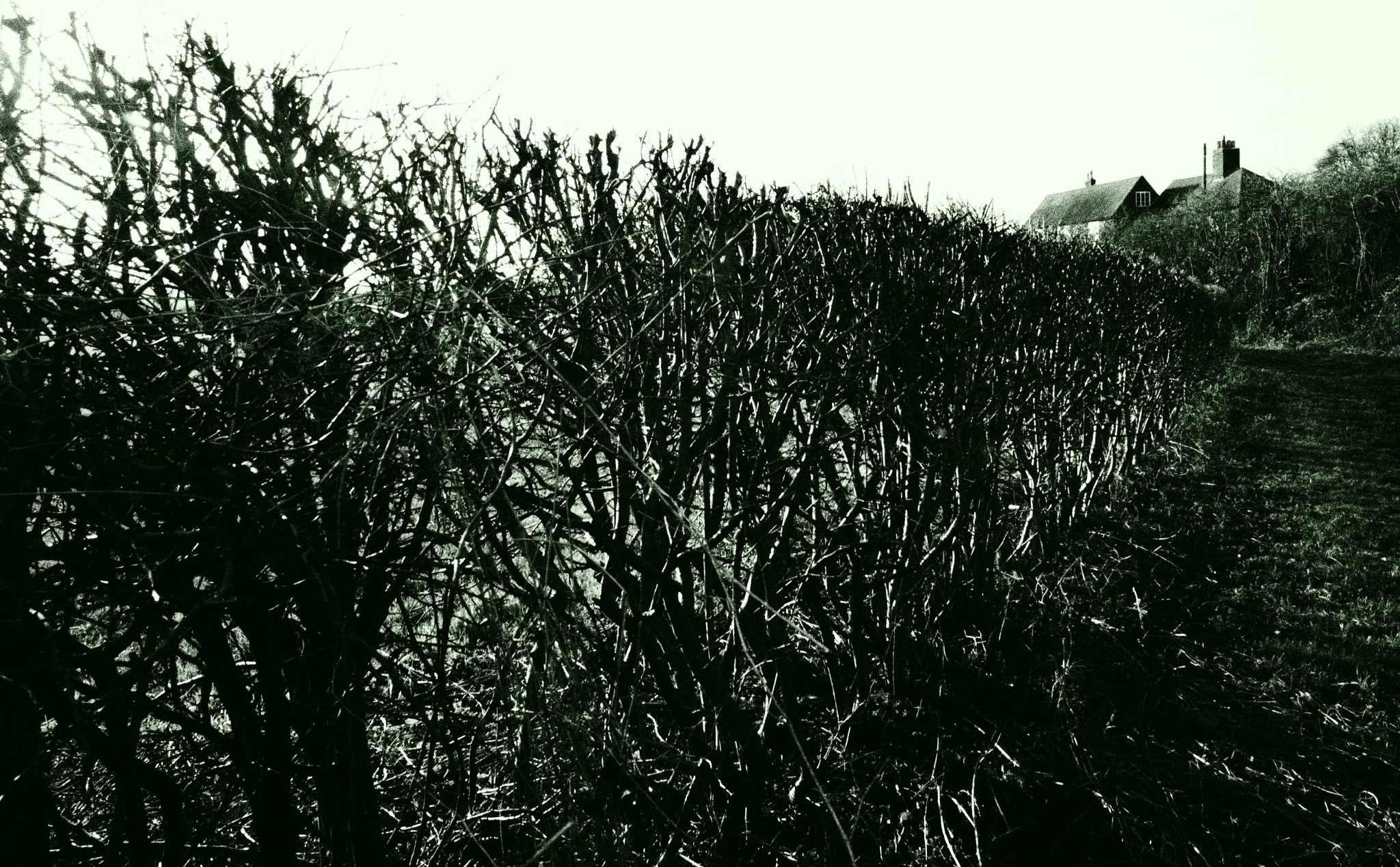 Hedge Stoke Bardolph - Winter by Gillian James
