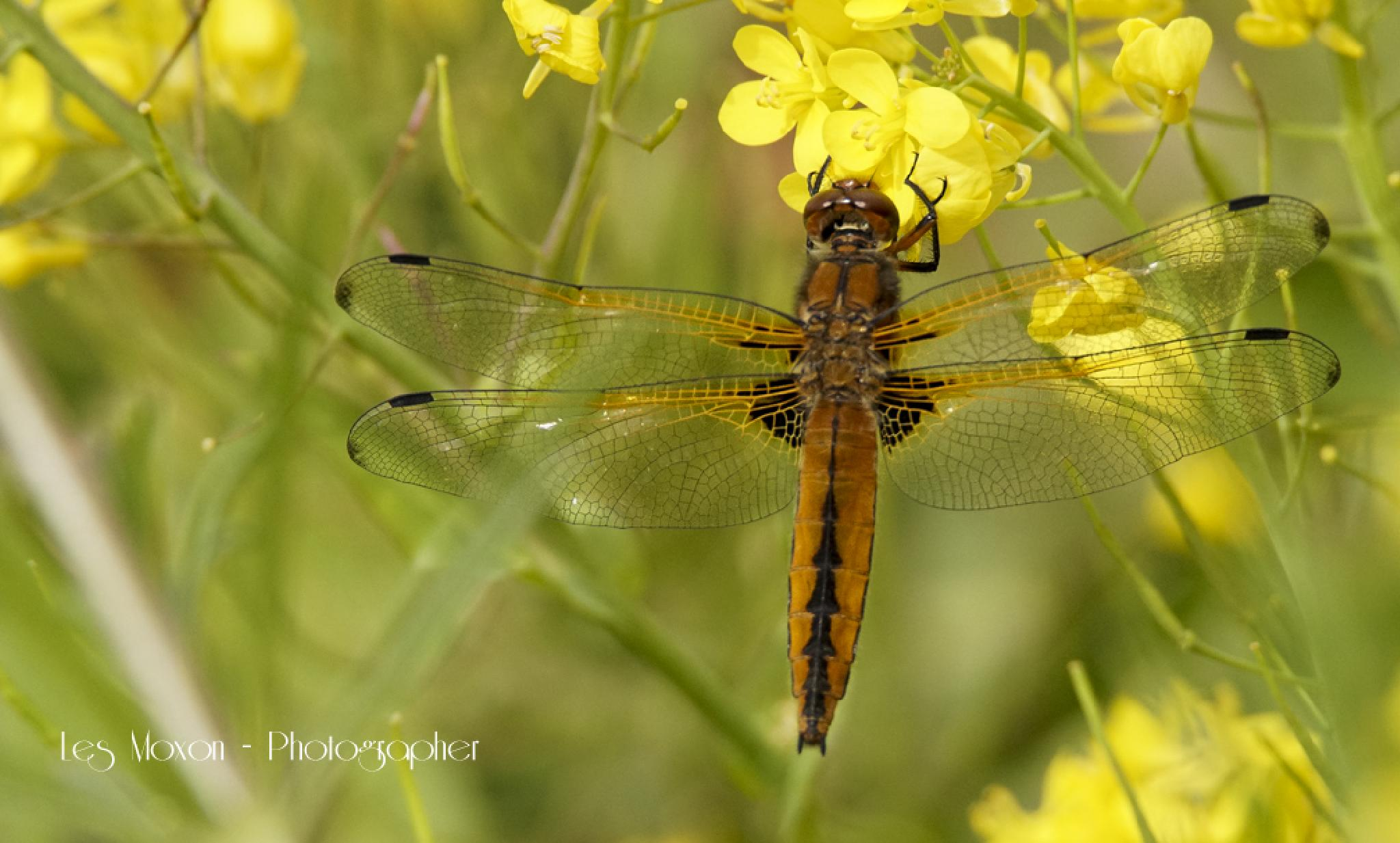 4 spot in the Rape by Les Moxon Photography