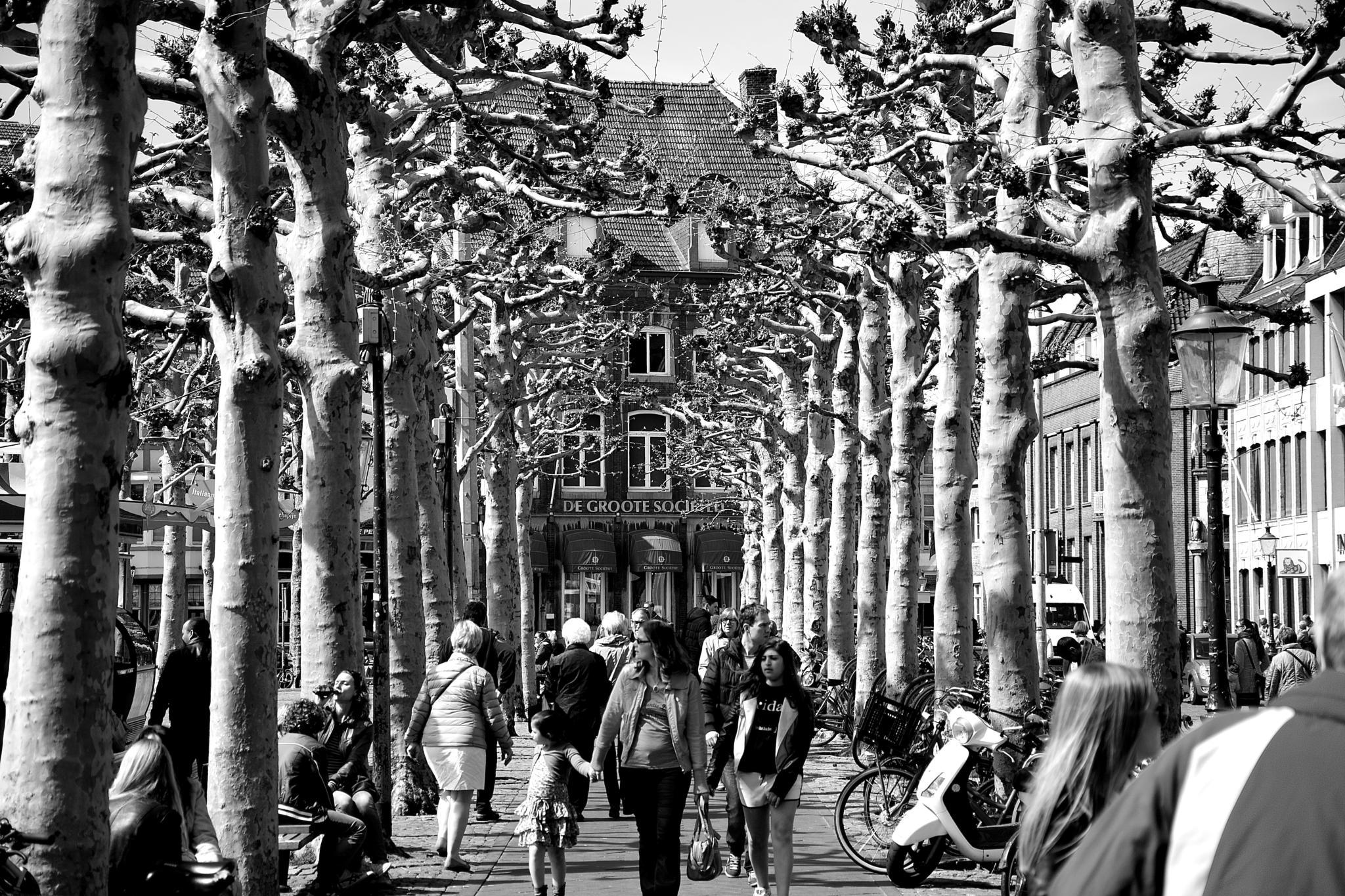 Vrijthof. Maastricht by Harrie Eickenboom.
