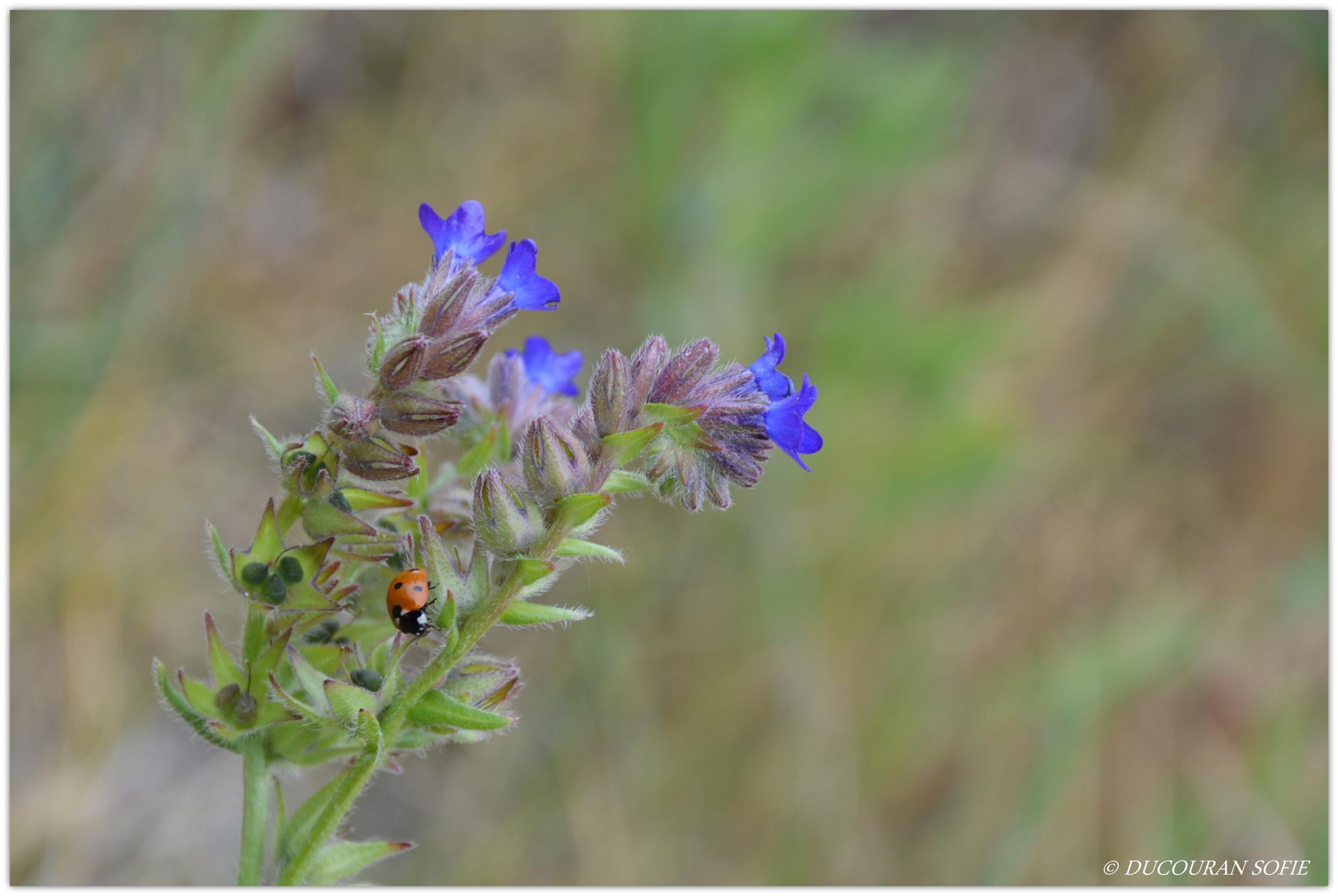 """Ladybug"" by sofie2502"