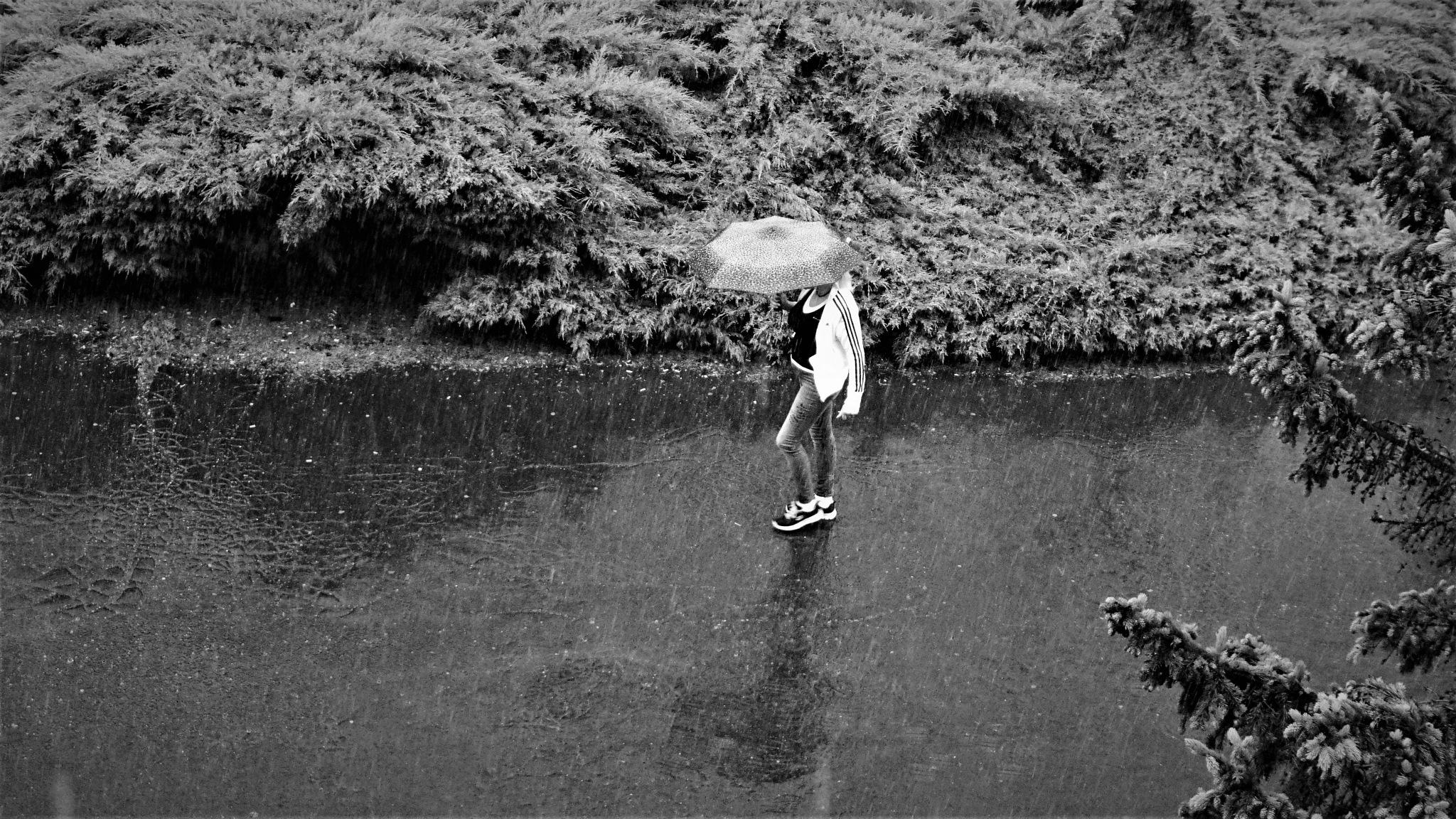 Woman in the rain  by  robert pojedinec robert