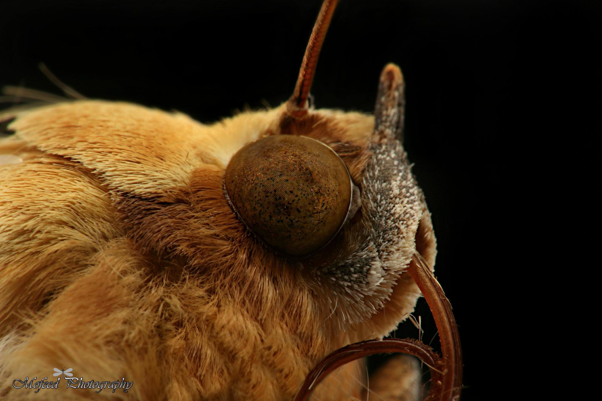 Moth by ⭐ Mofeed Abu Shalwa