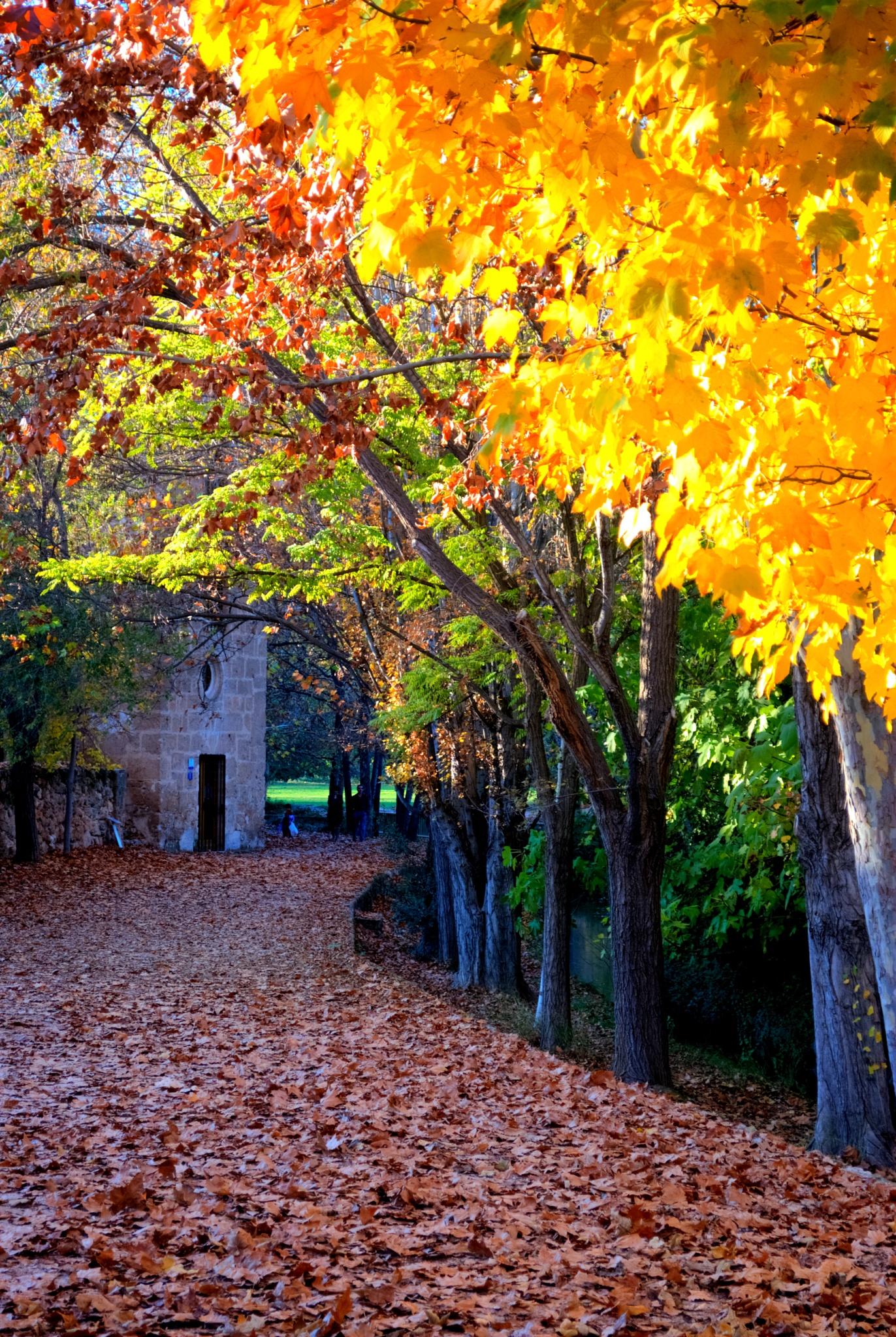 Últimas tardes de otoño - Last autumn afternoons. - Fuentes del Marqués - Caravaca de la Cruz by MiguelOnPhotography