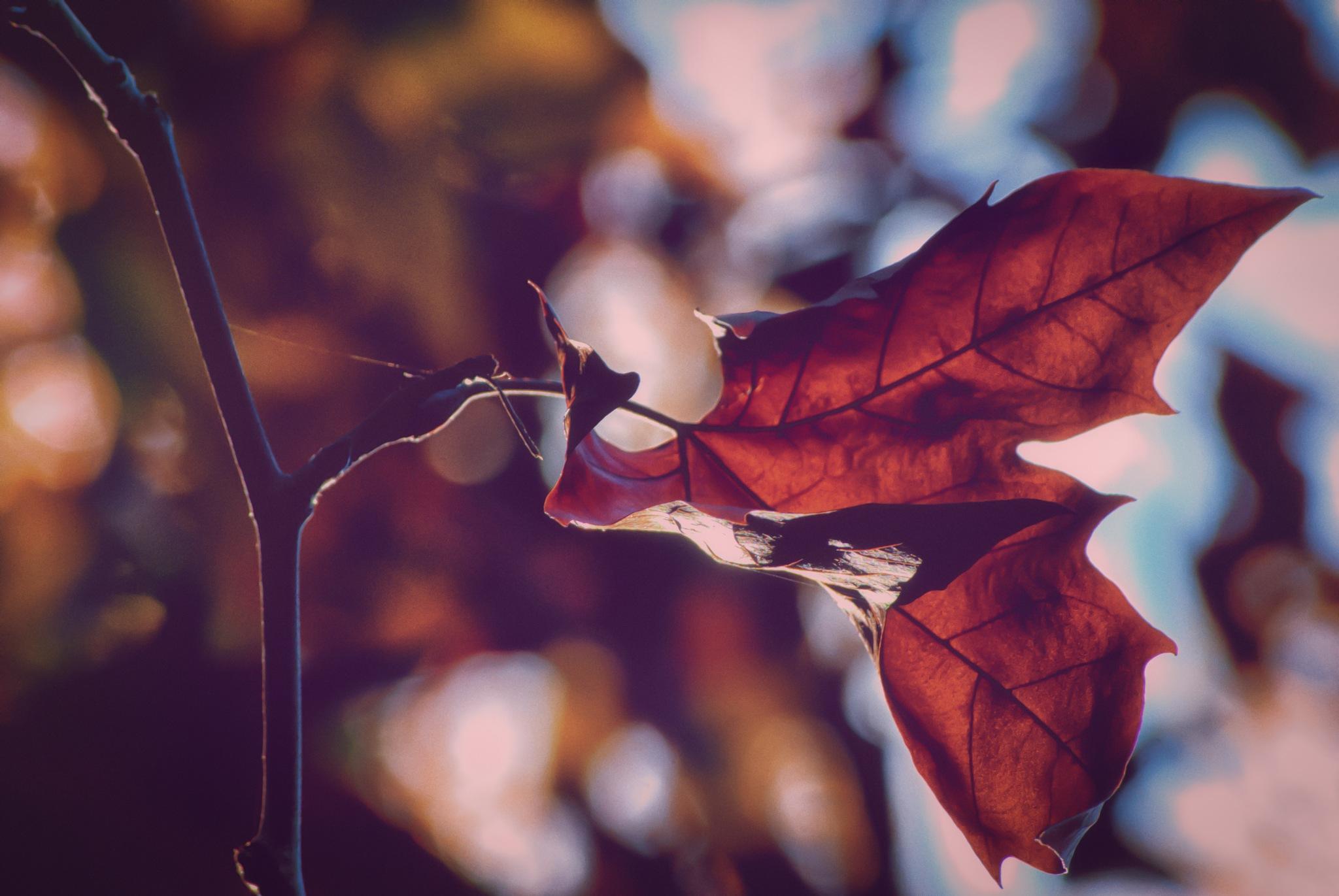 El otoño que no llega. Caravaca de la Cruz. by MiguelOnPhotography