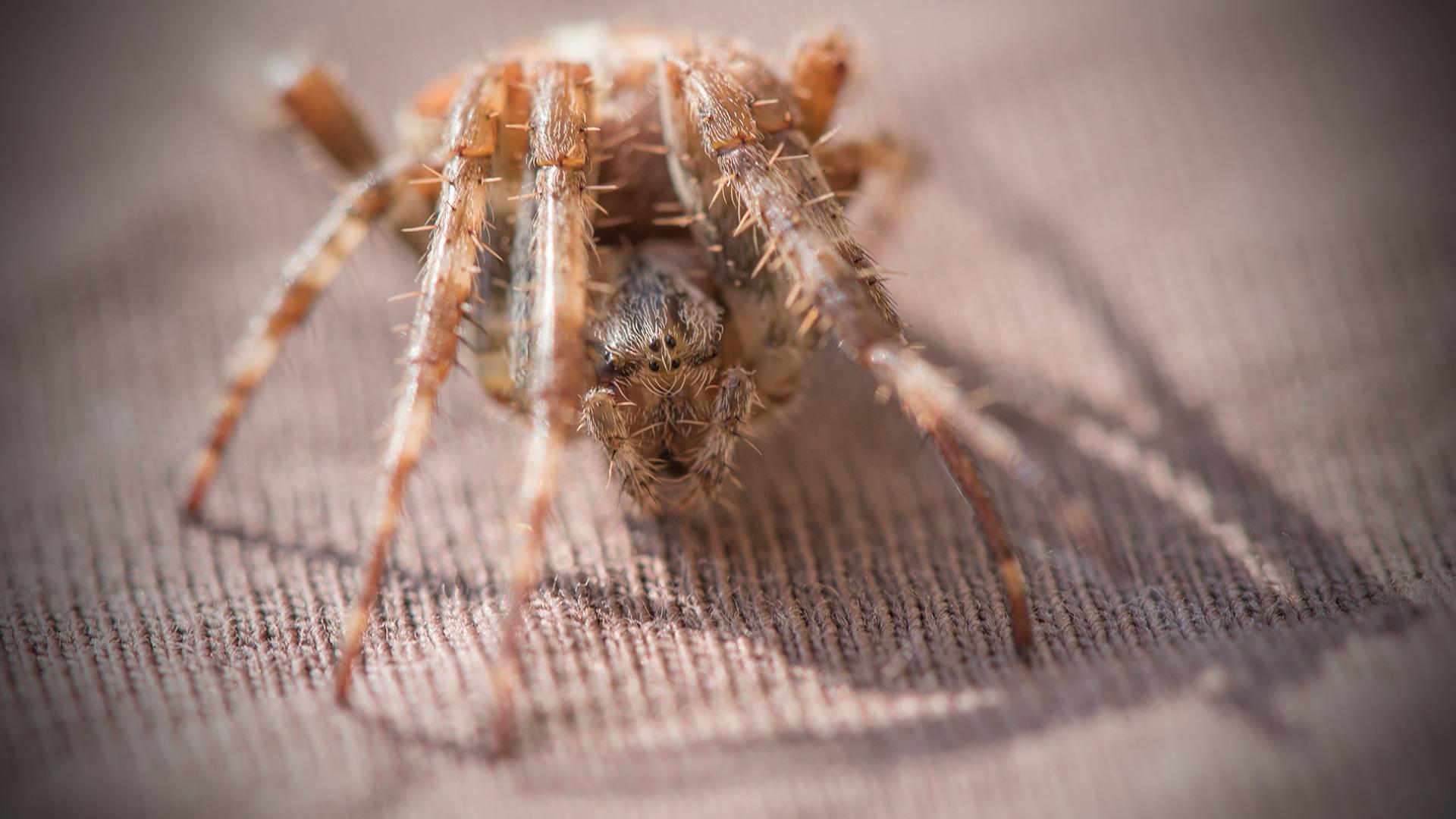 Spider by Per Martens