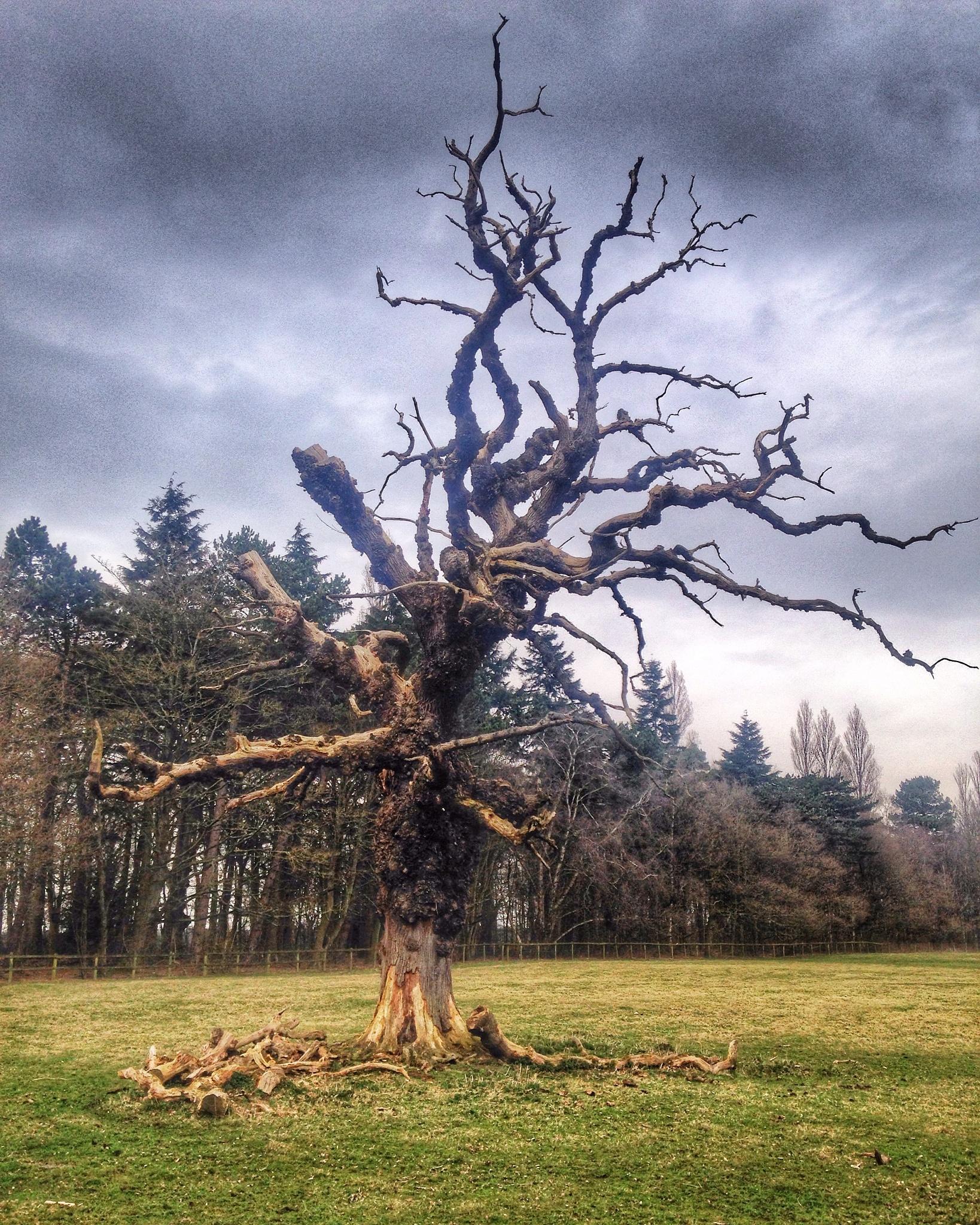 Lonely tree by VicsPics