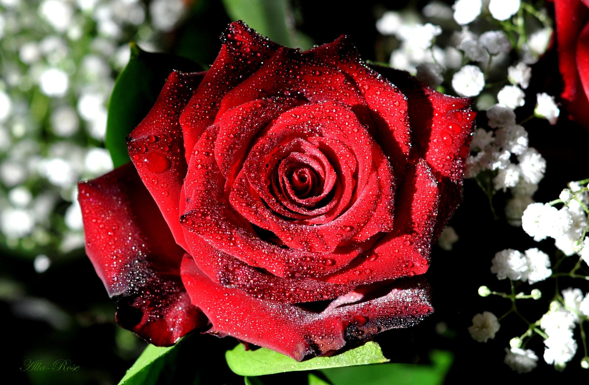 beauty by Alla-Rose