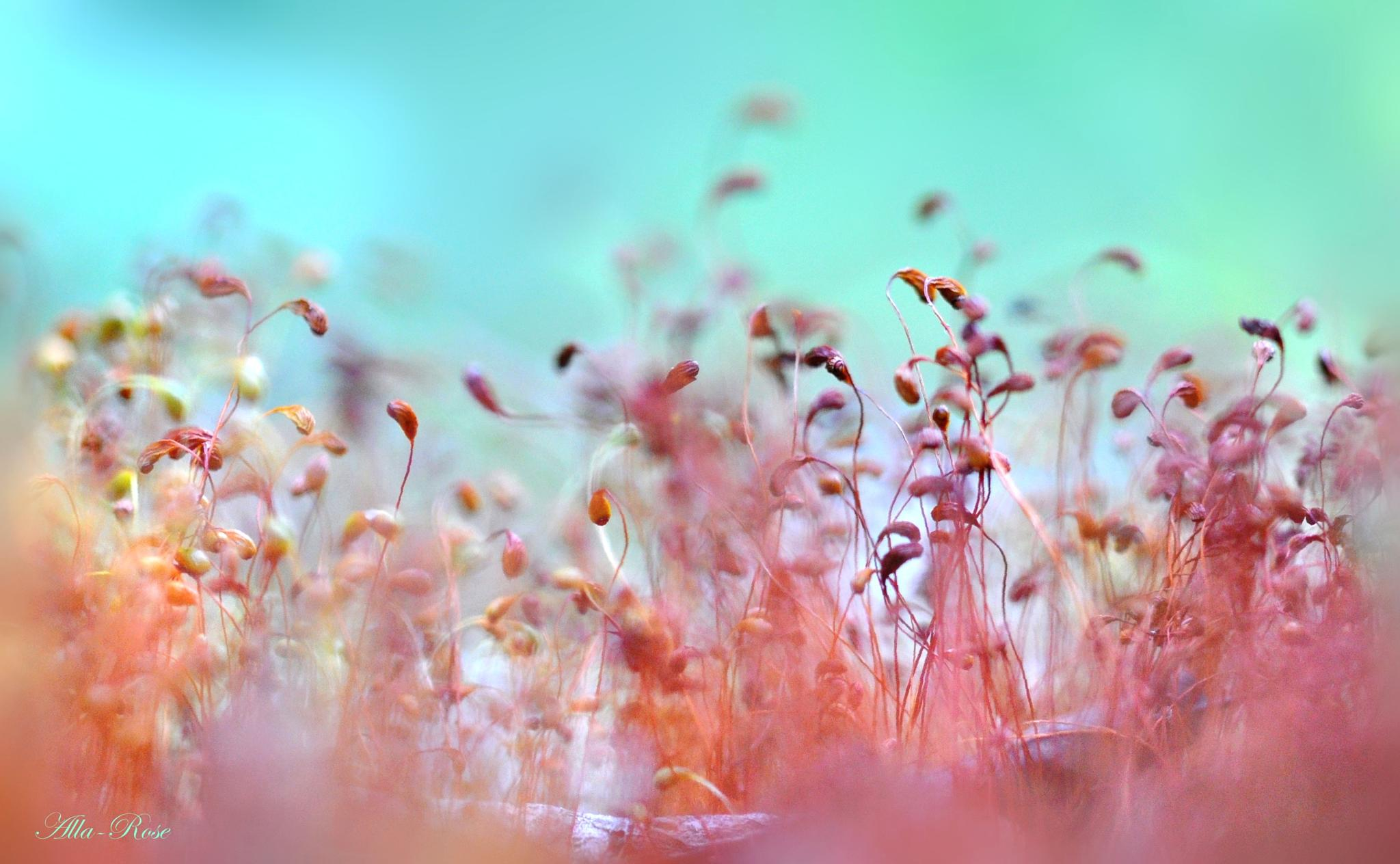 Bokeh with moss by Alla-Rose