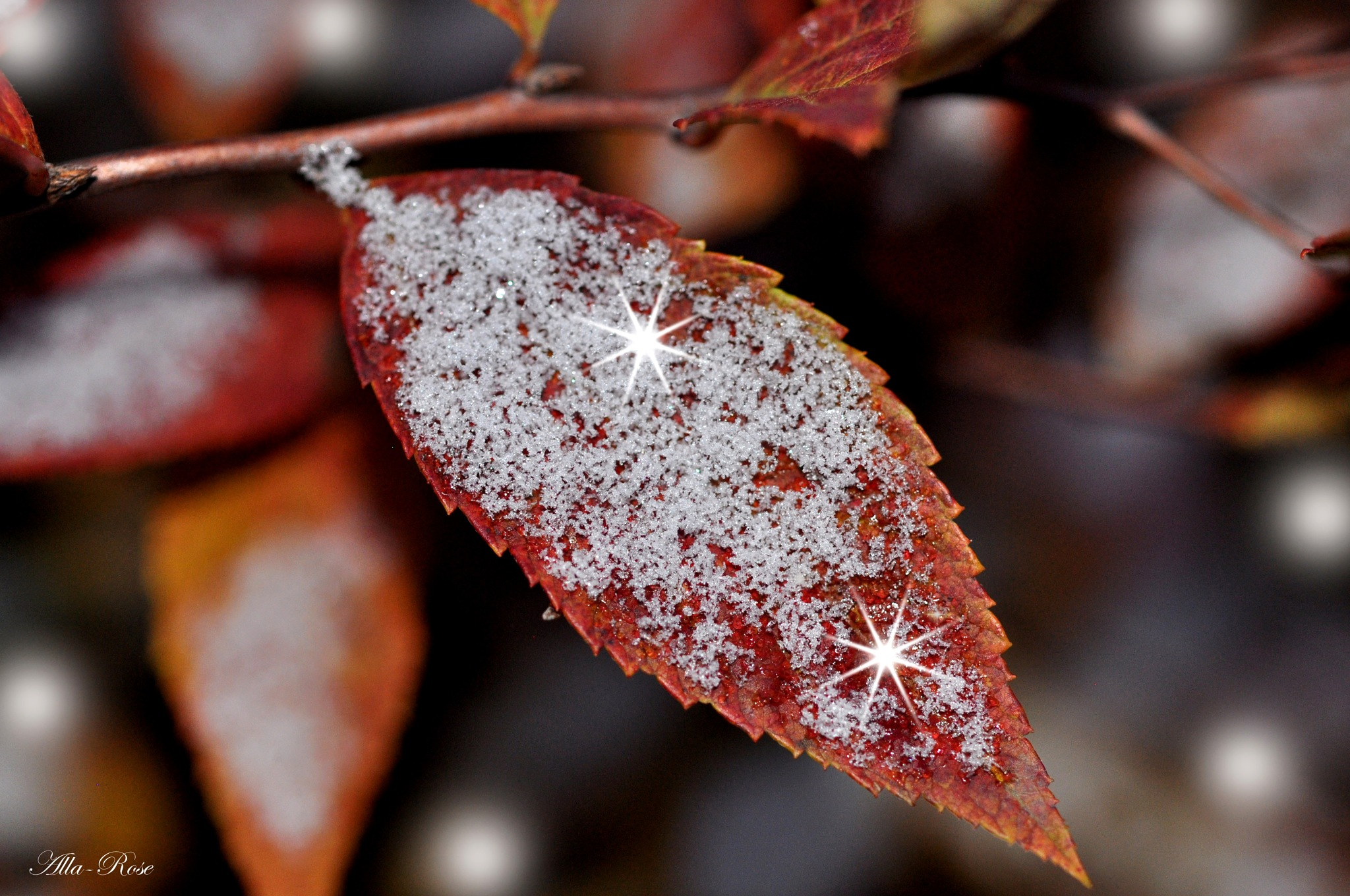 The first snow in October by Alla-Rose