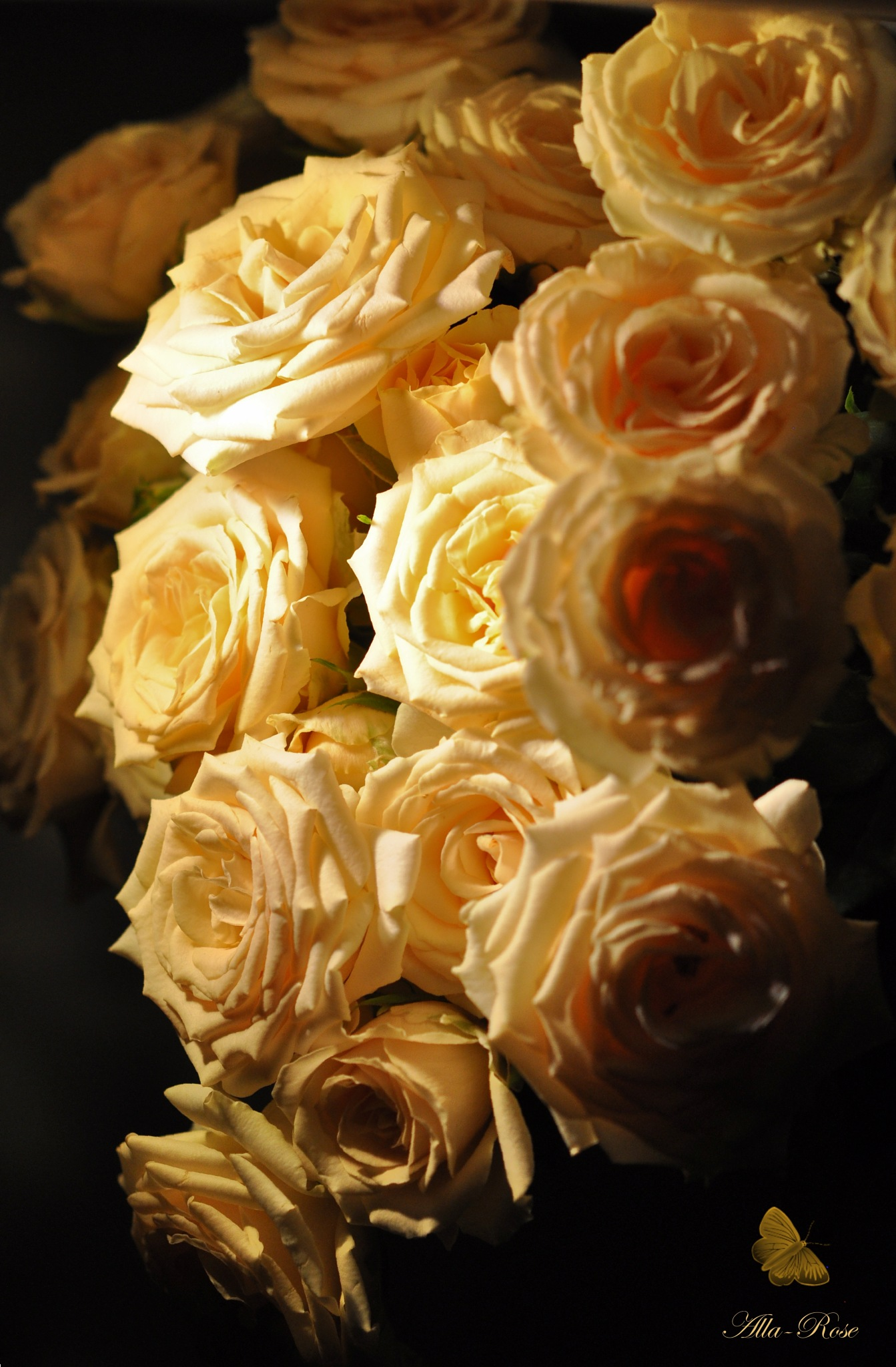romantic evening by Alla-Rose