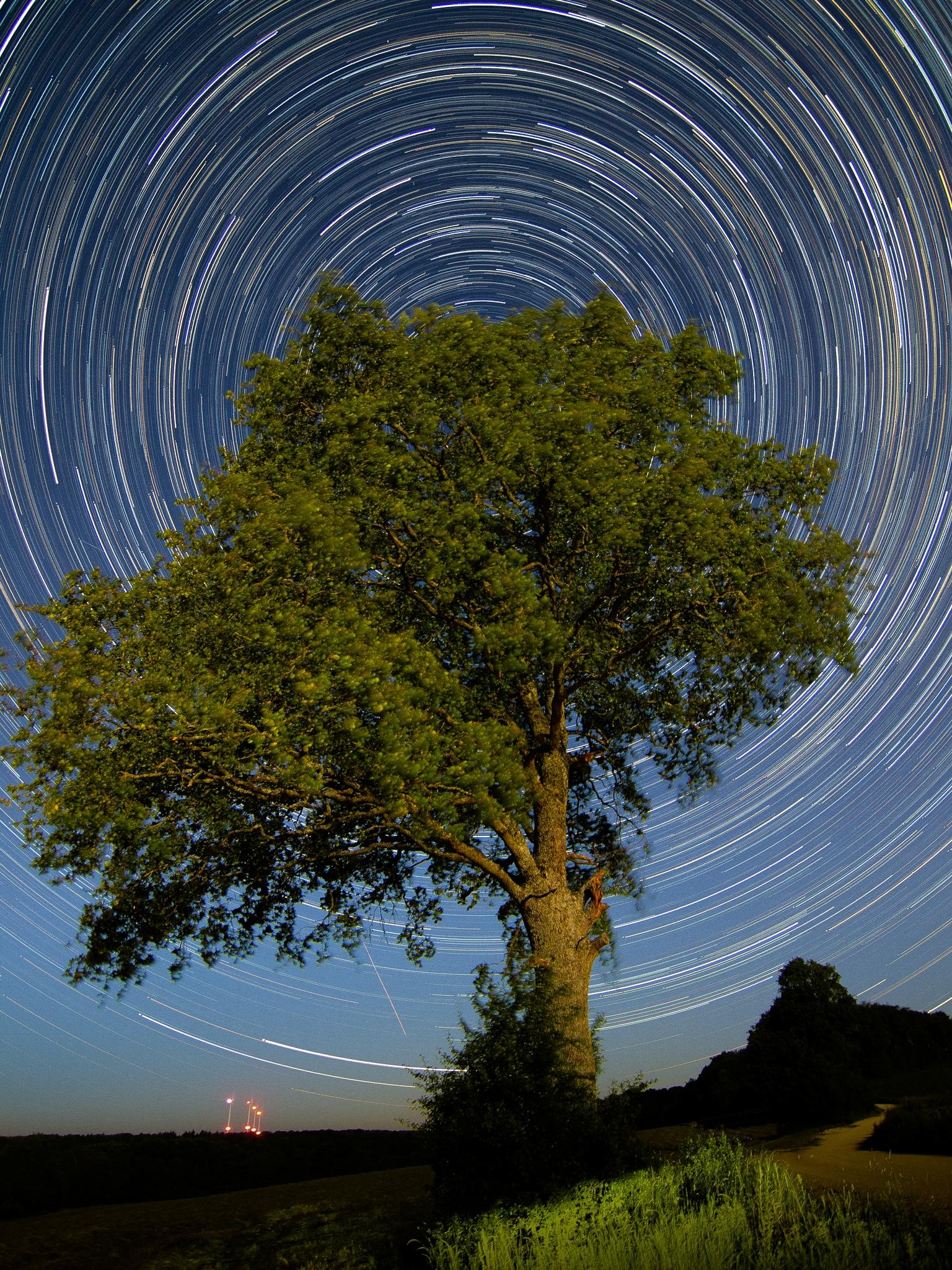 Leaves Of Stars by Darblanc