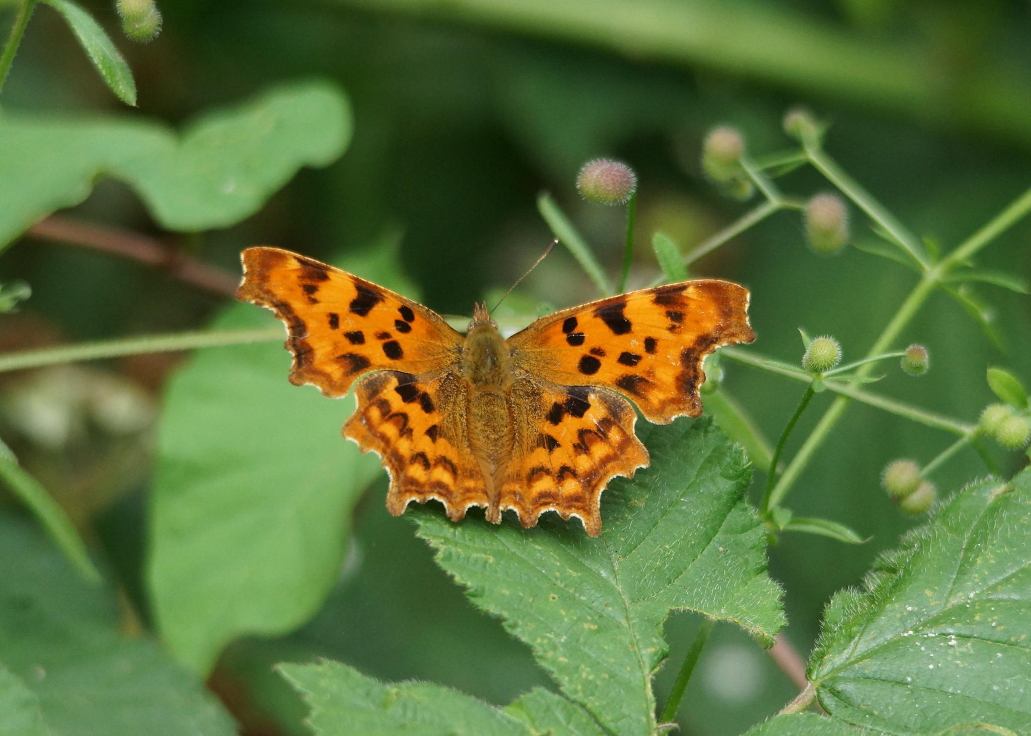 Comma by Mark Askew