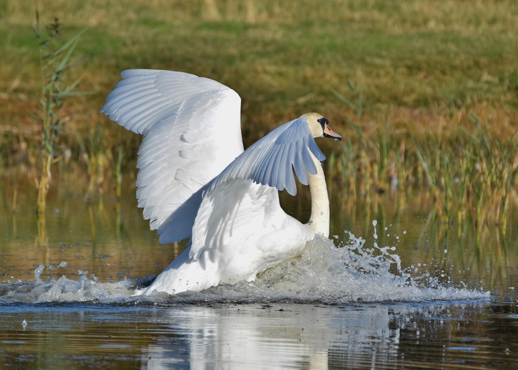 Splash Landing by Mark Askew