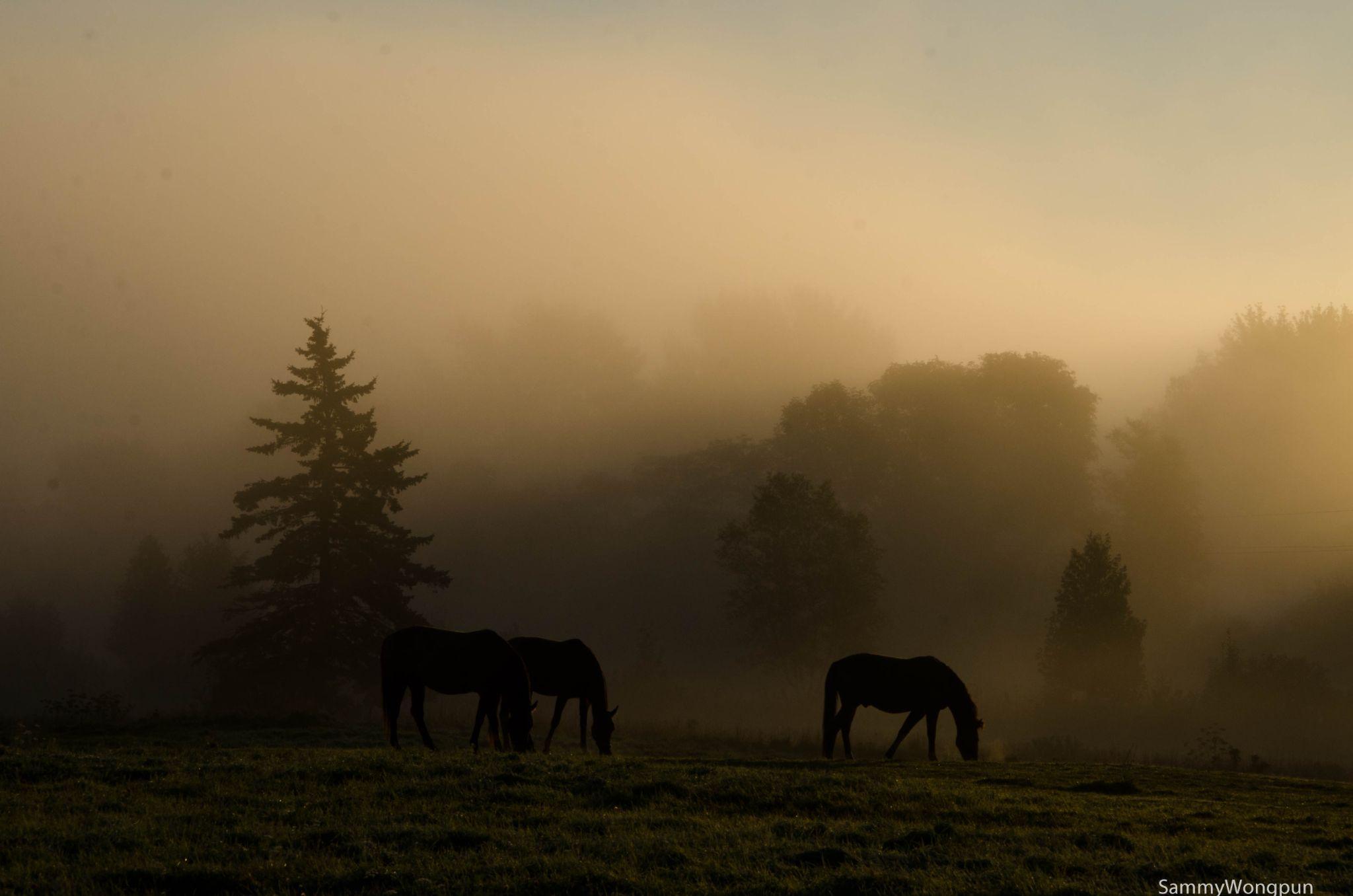 3 horses by sammywongpun