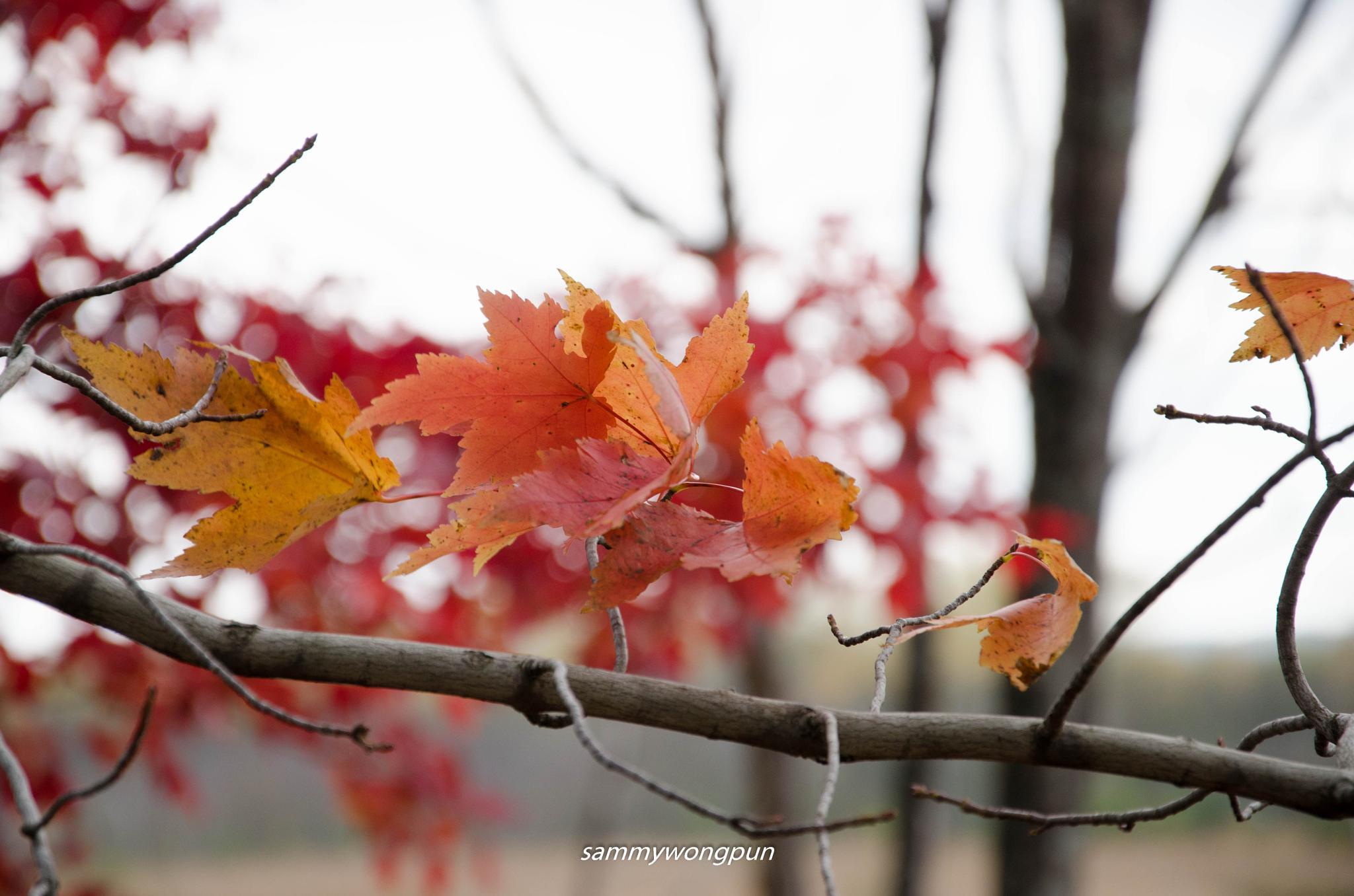 fall  by sammywongpun