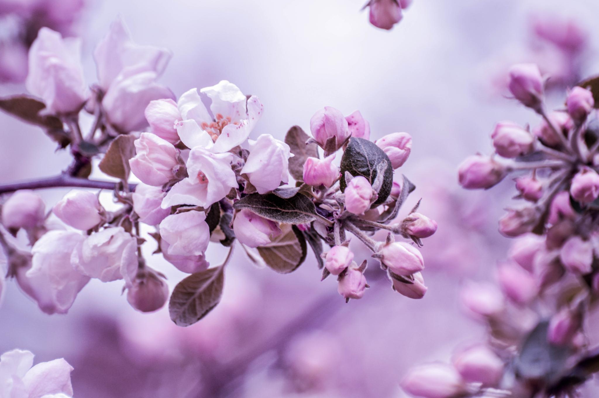 last spring .. by sammywongpun