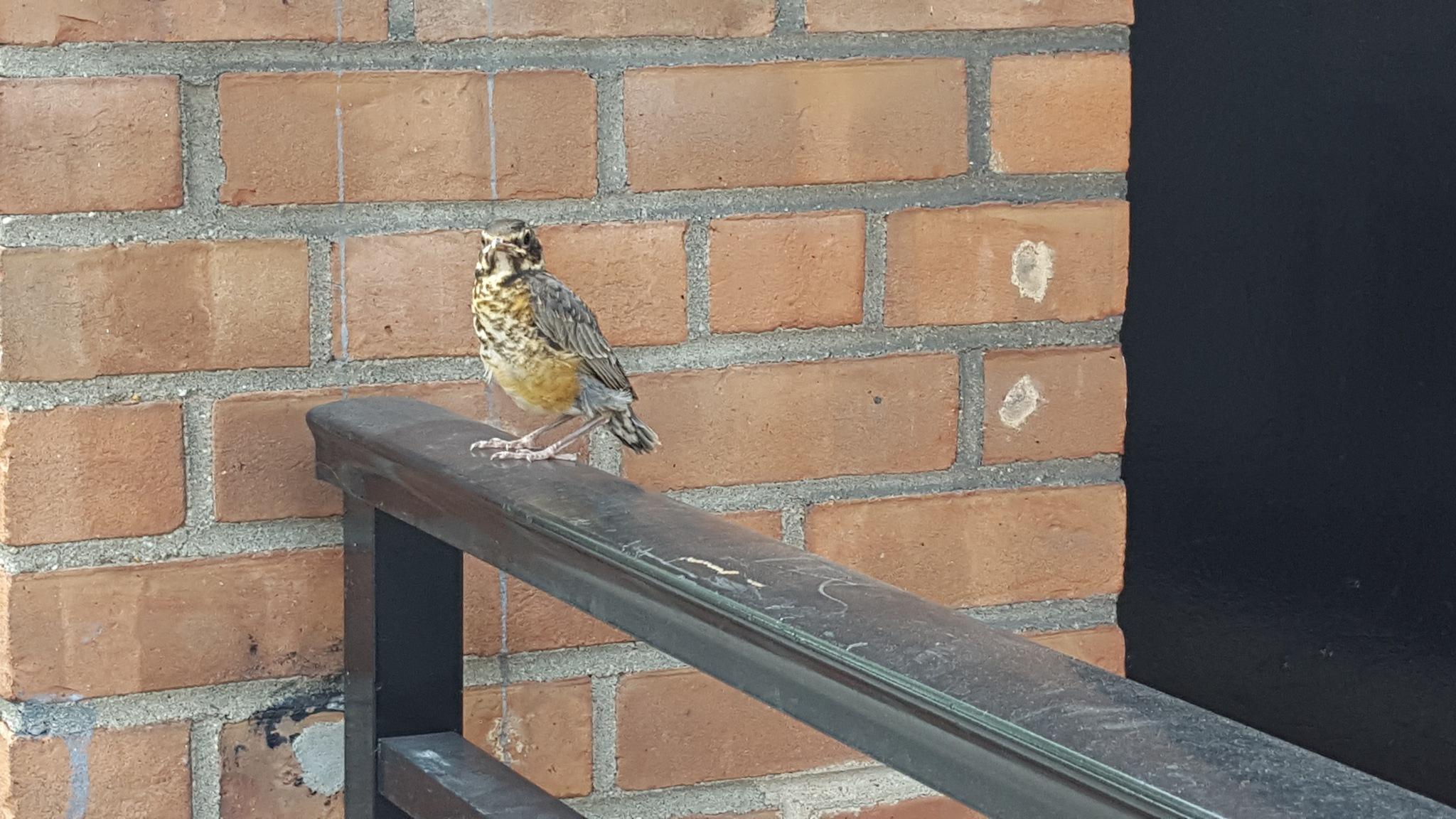Bird by waltermar48