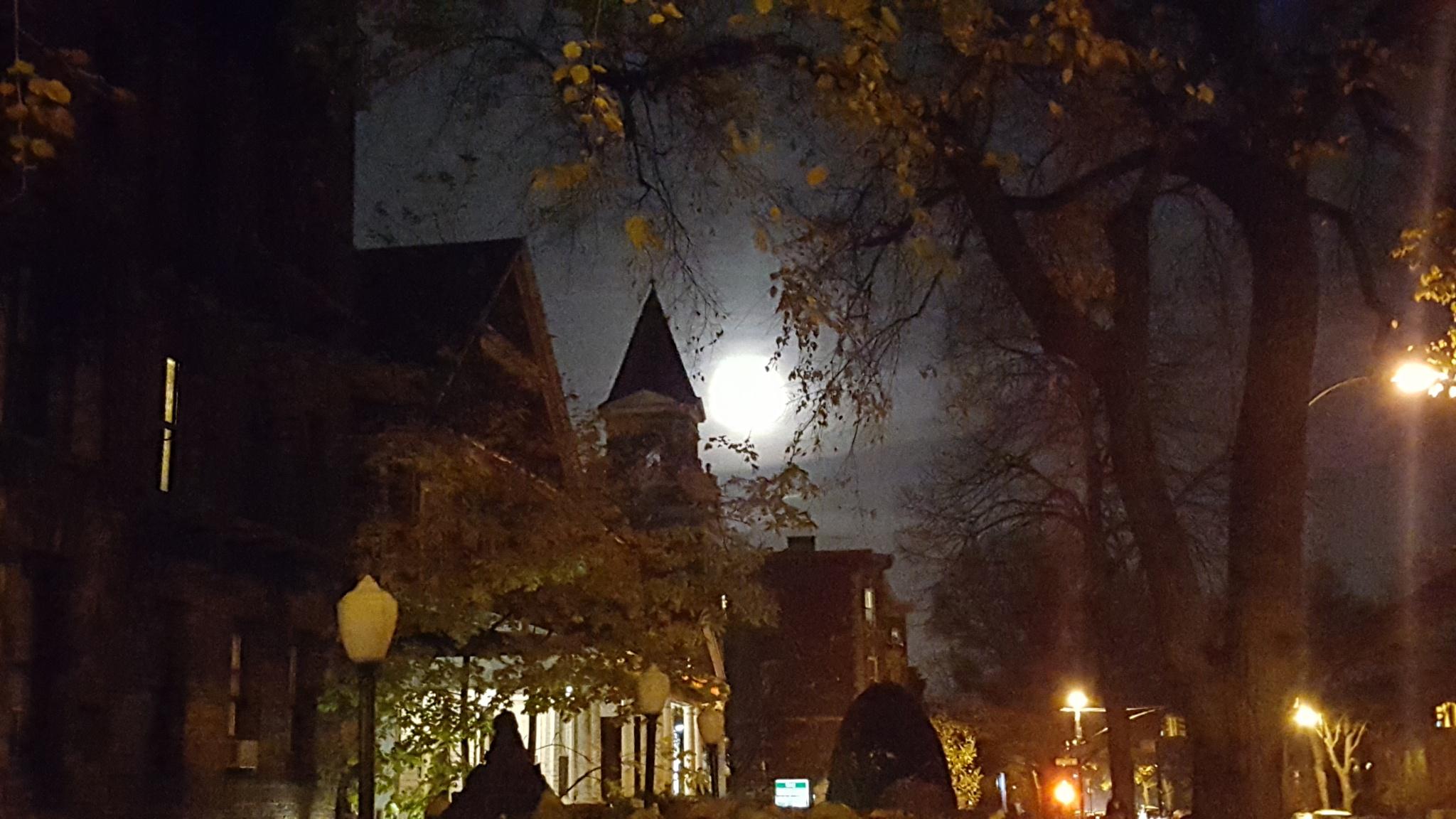 Moonlight night by waltermar48