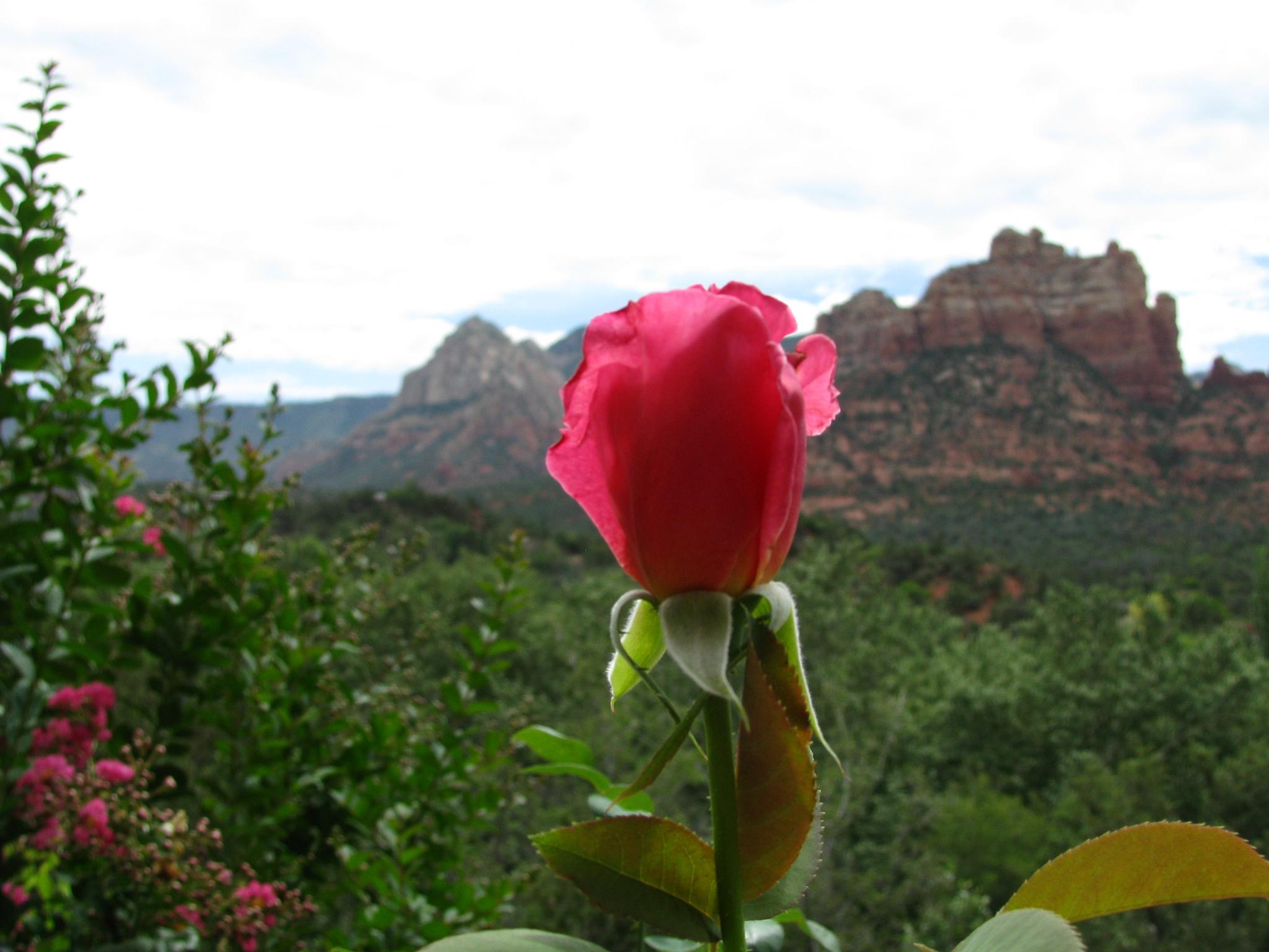 Sedona Rose by Anna Marie