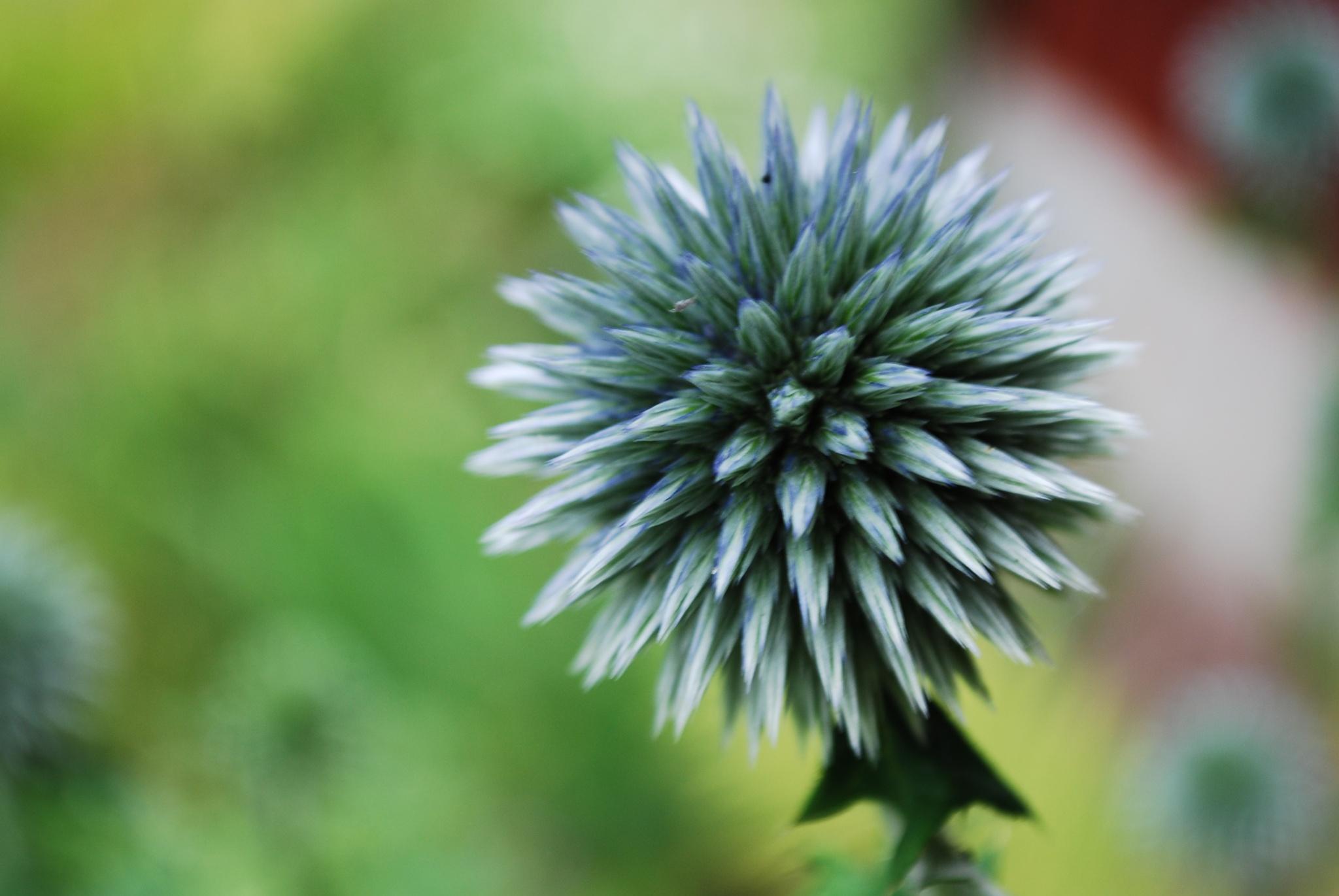 spiky flower by Emelie Sjöström