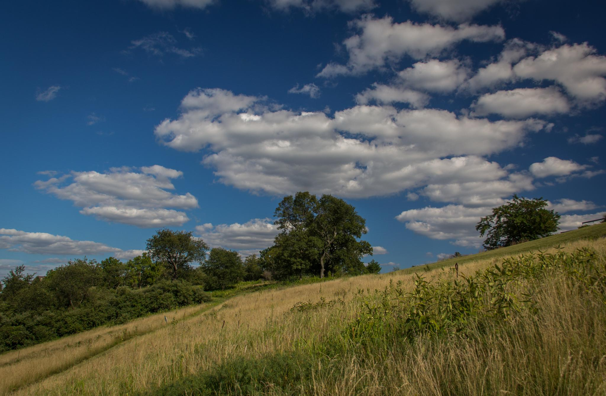 Blue Sky and Green Trees by Otto Jay Lehrbach