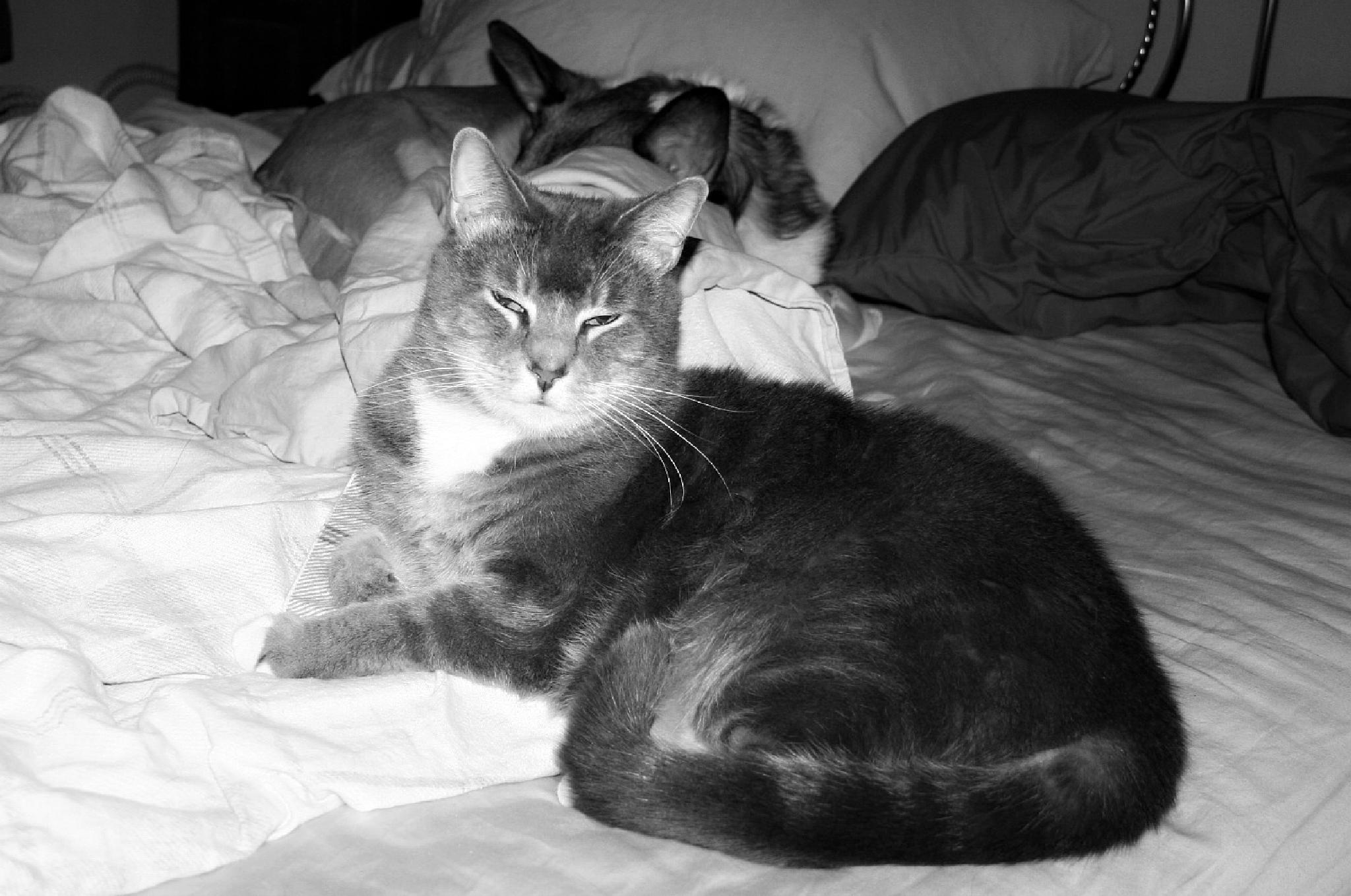 Onslow and Annabelle in B&W by Hal Stedman