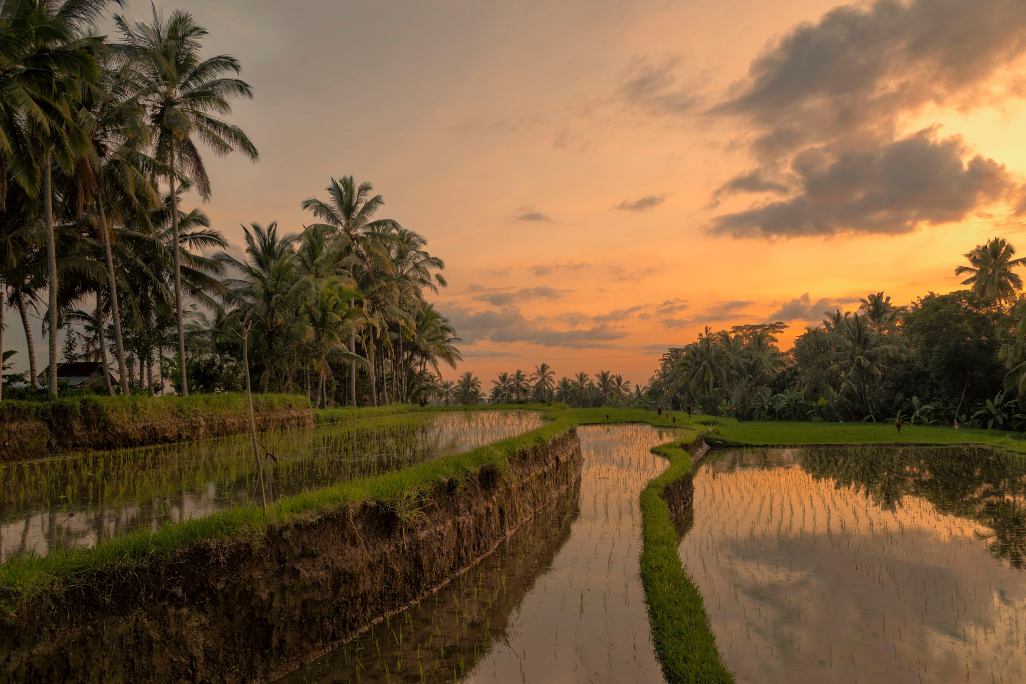 rice field sunset by Dave Roberts