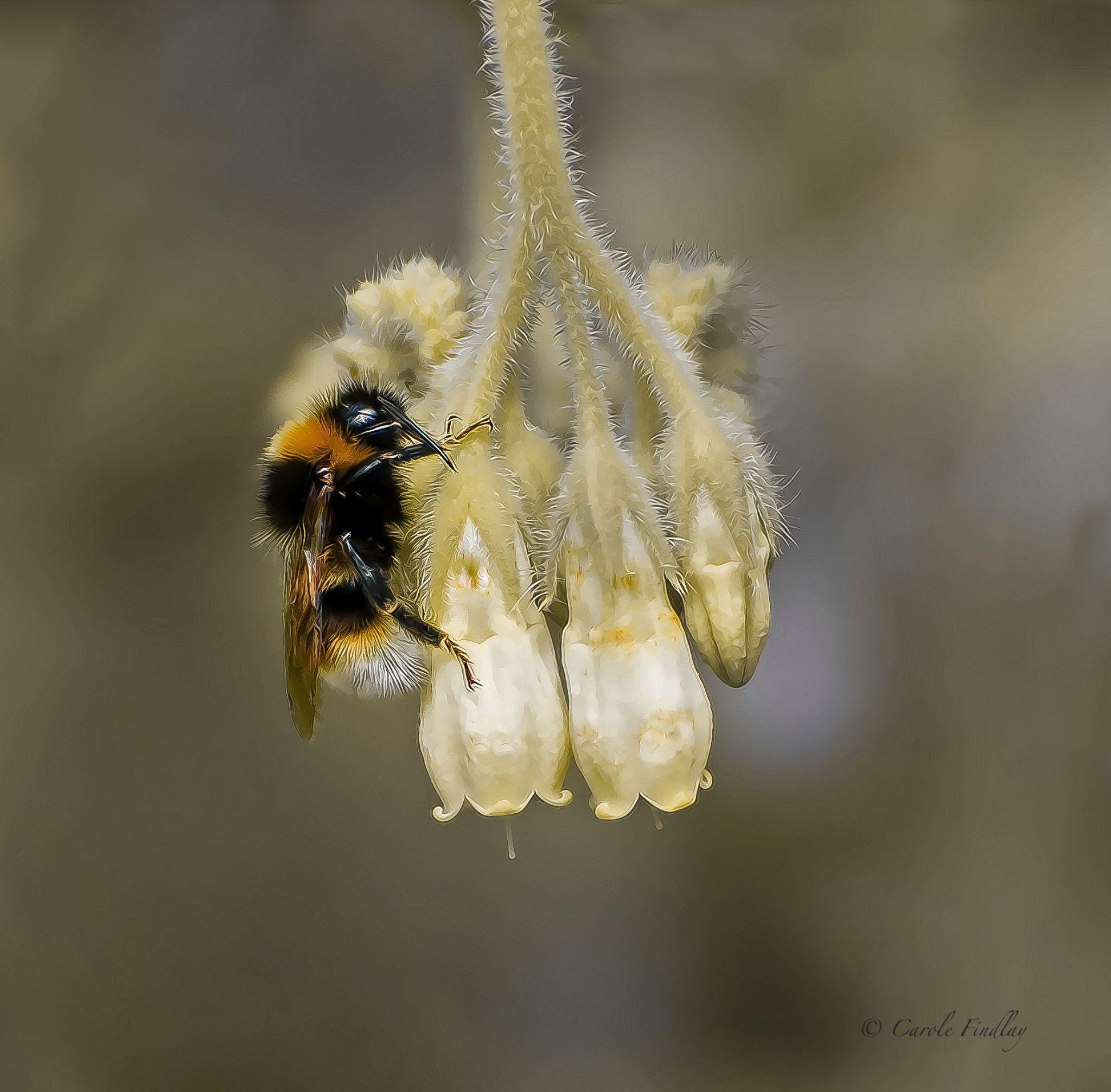 Bumbling along by cazfindlay