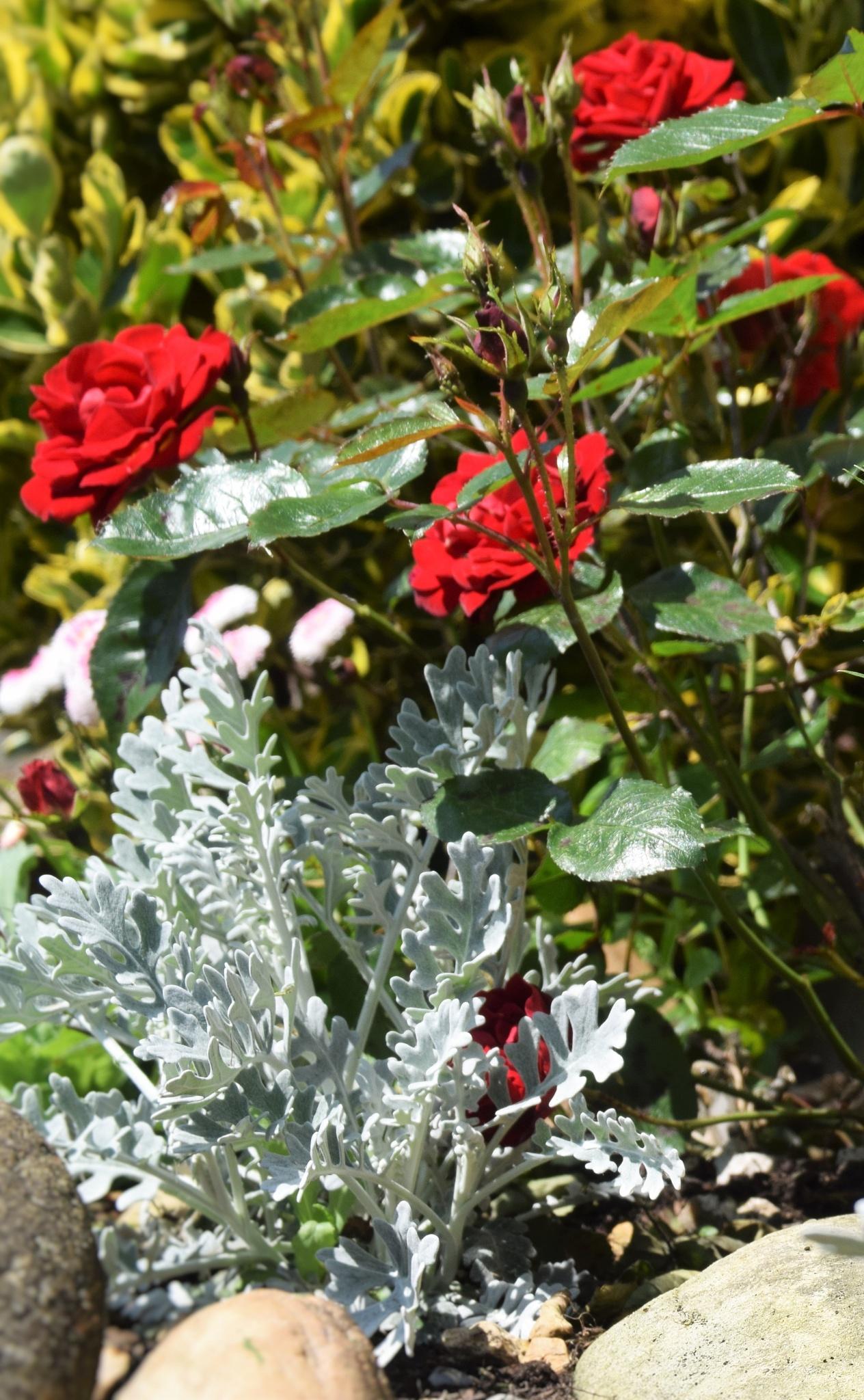 flowers  by bryan dellbridge