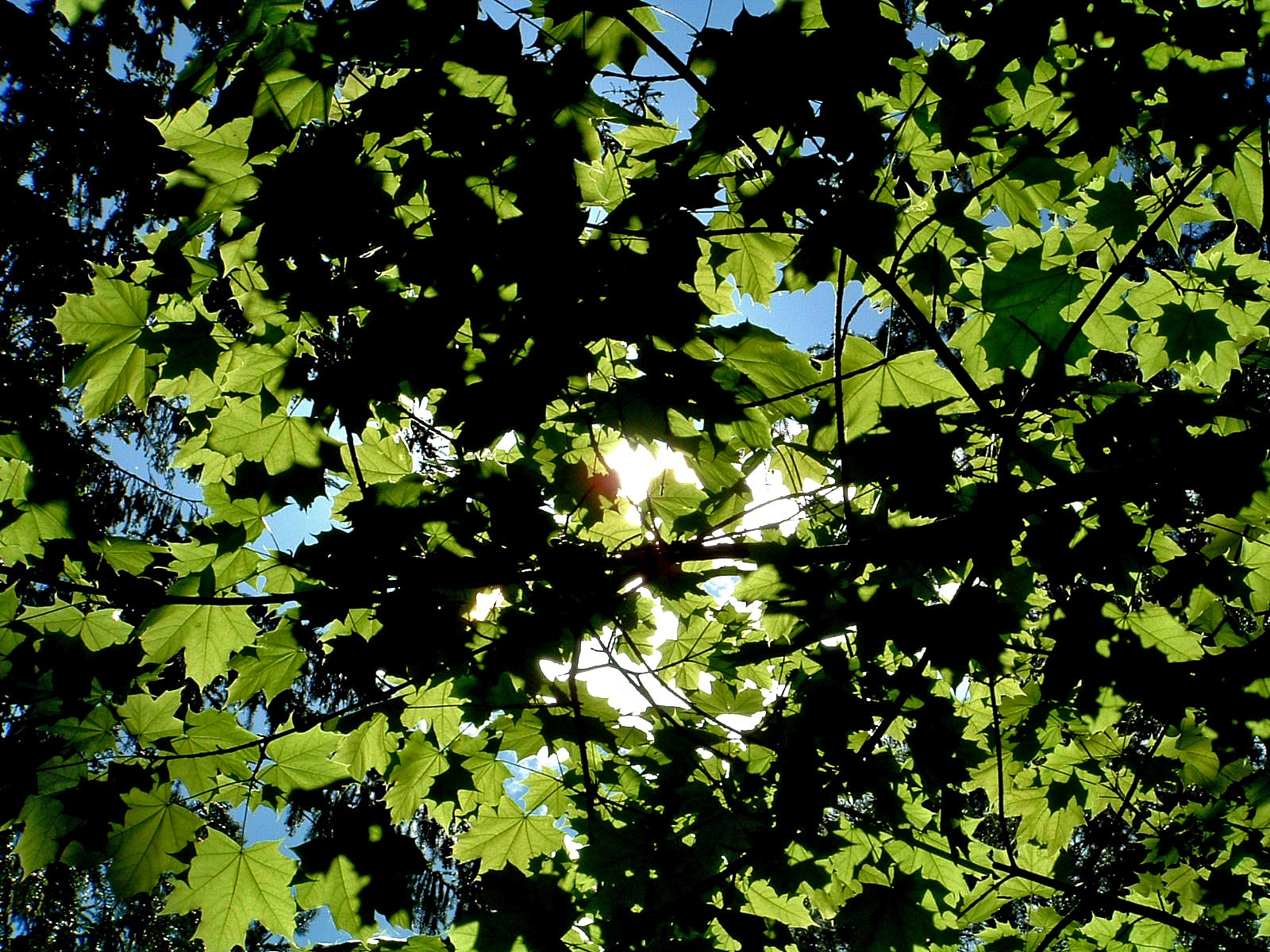 Sun through foliage  by Anders Wettergren