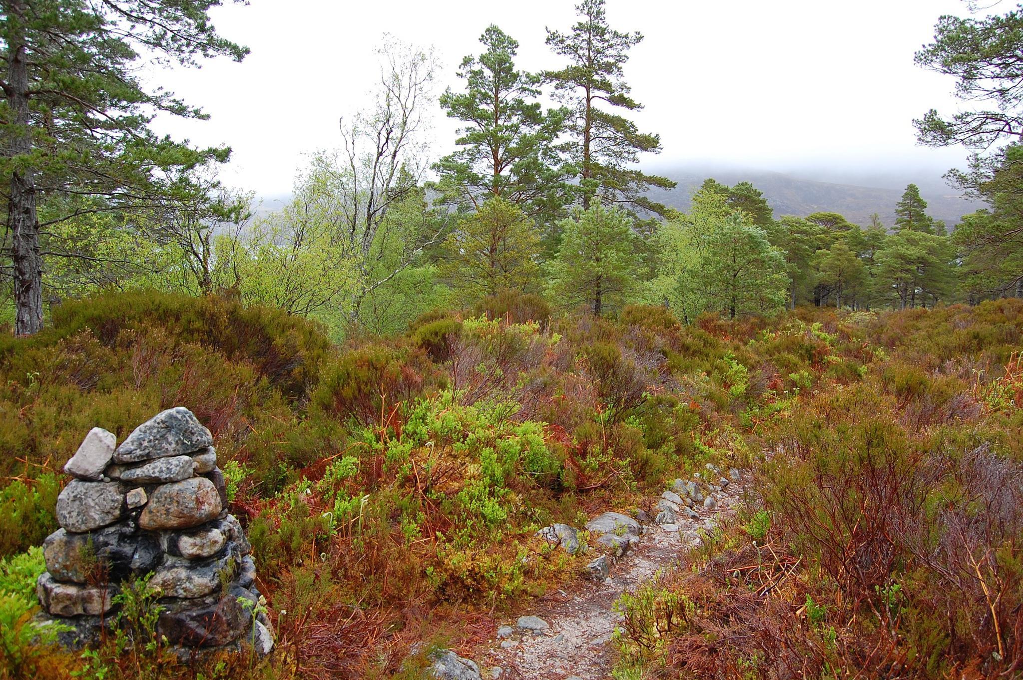 Woodland walk by Jo Ison