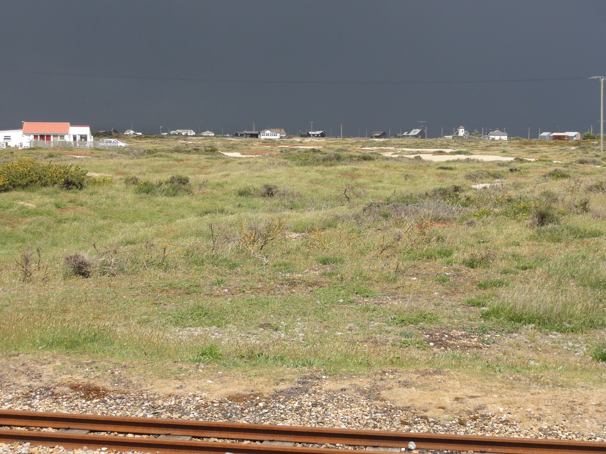 DUNGENESS KENT by mikewoodland21