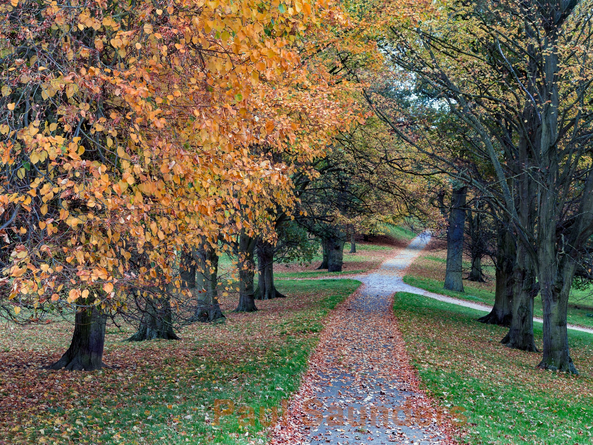 Autumn Leaves by Paul Saunders