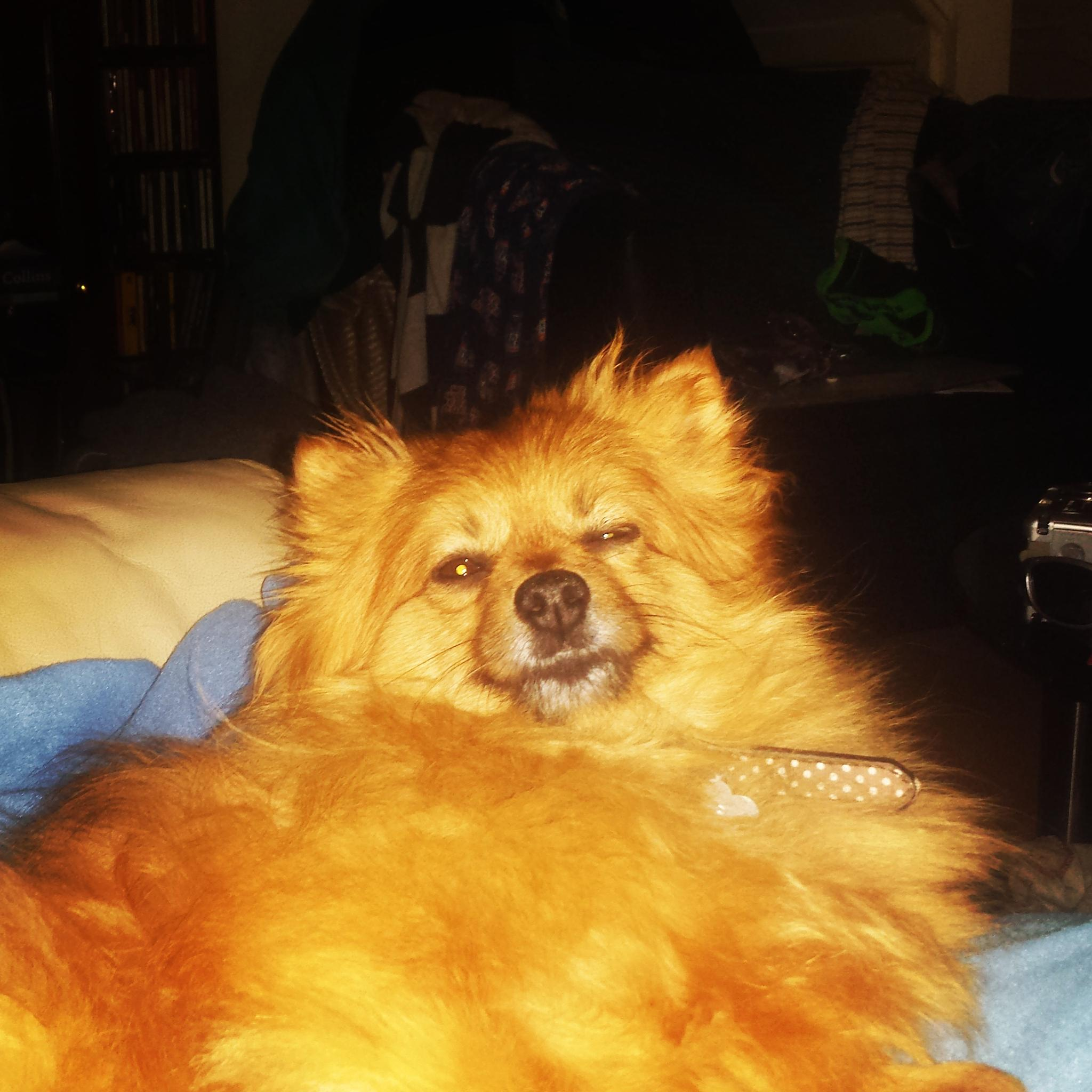 my dog by lprice