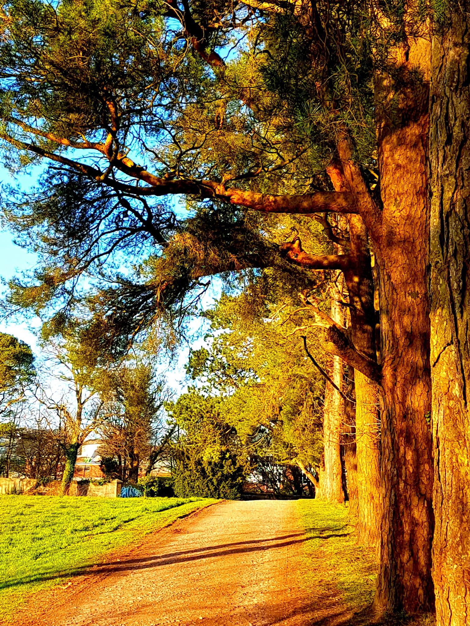 Cyfarthfa park  by lprice