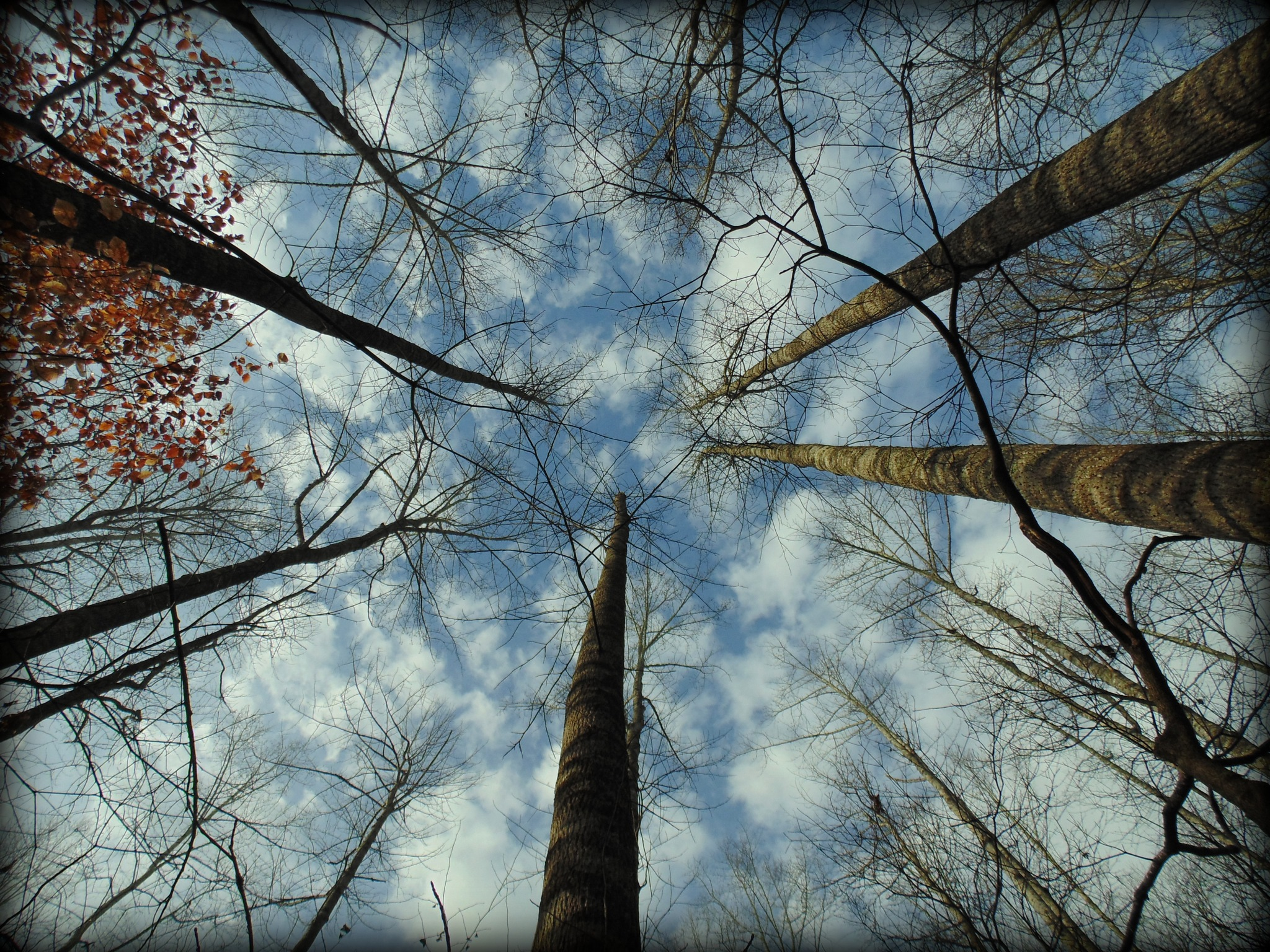 Reach to the Heavens by Christine Peileke