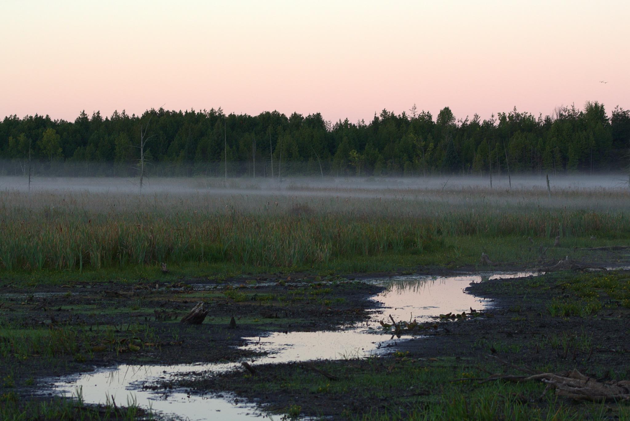 In the morning mist. by sakarasailor